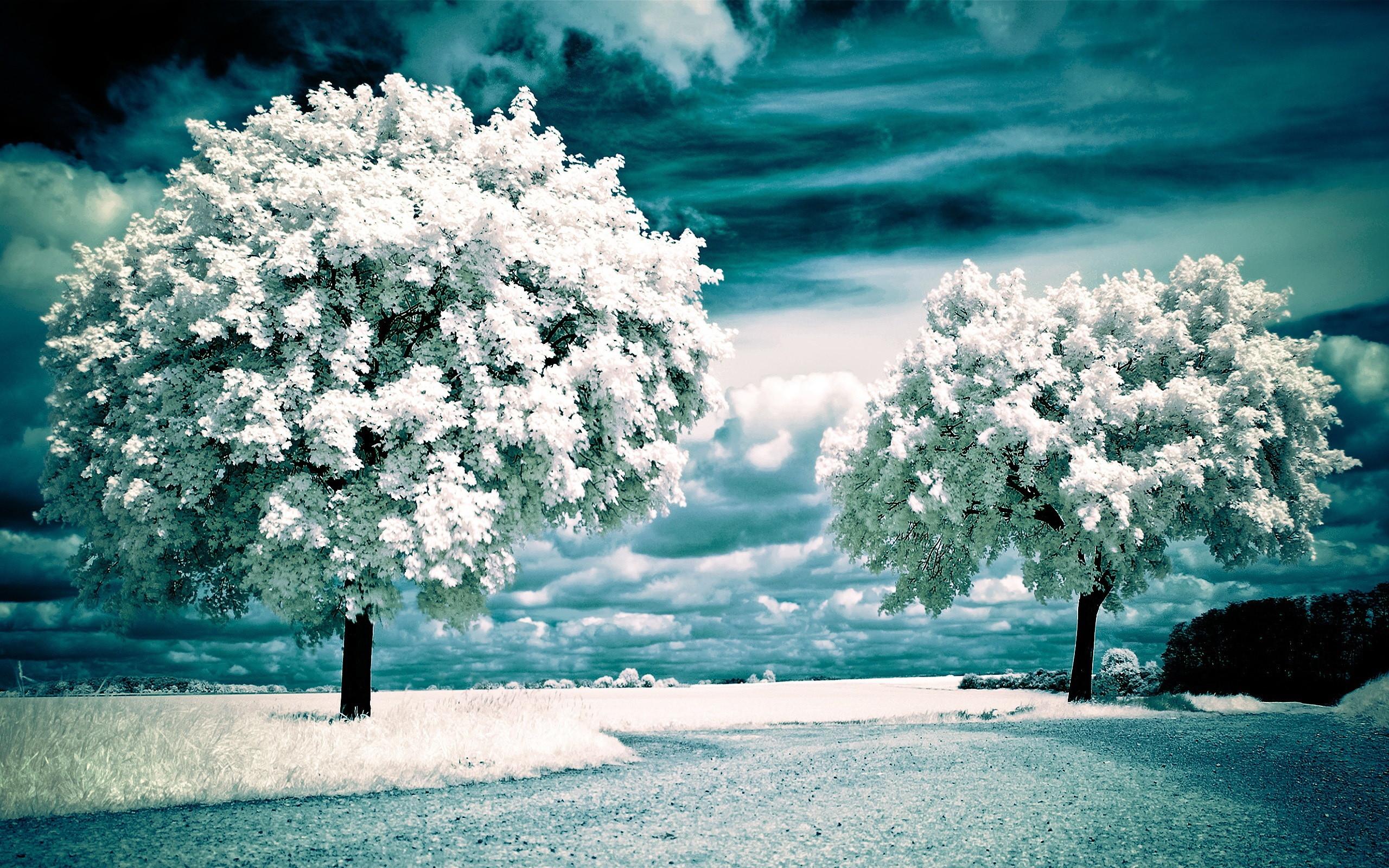 download hình thiên nhiên