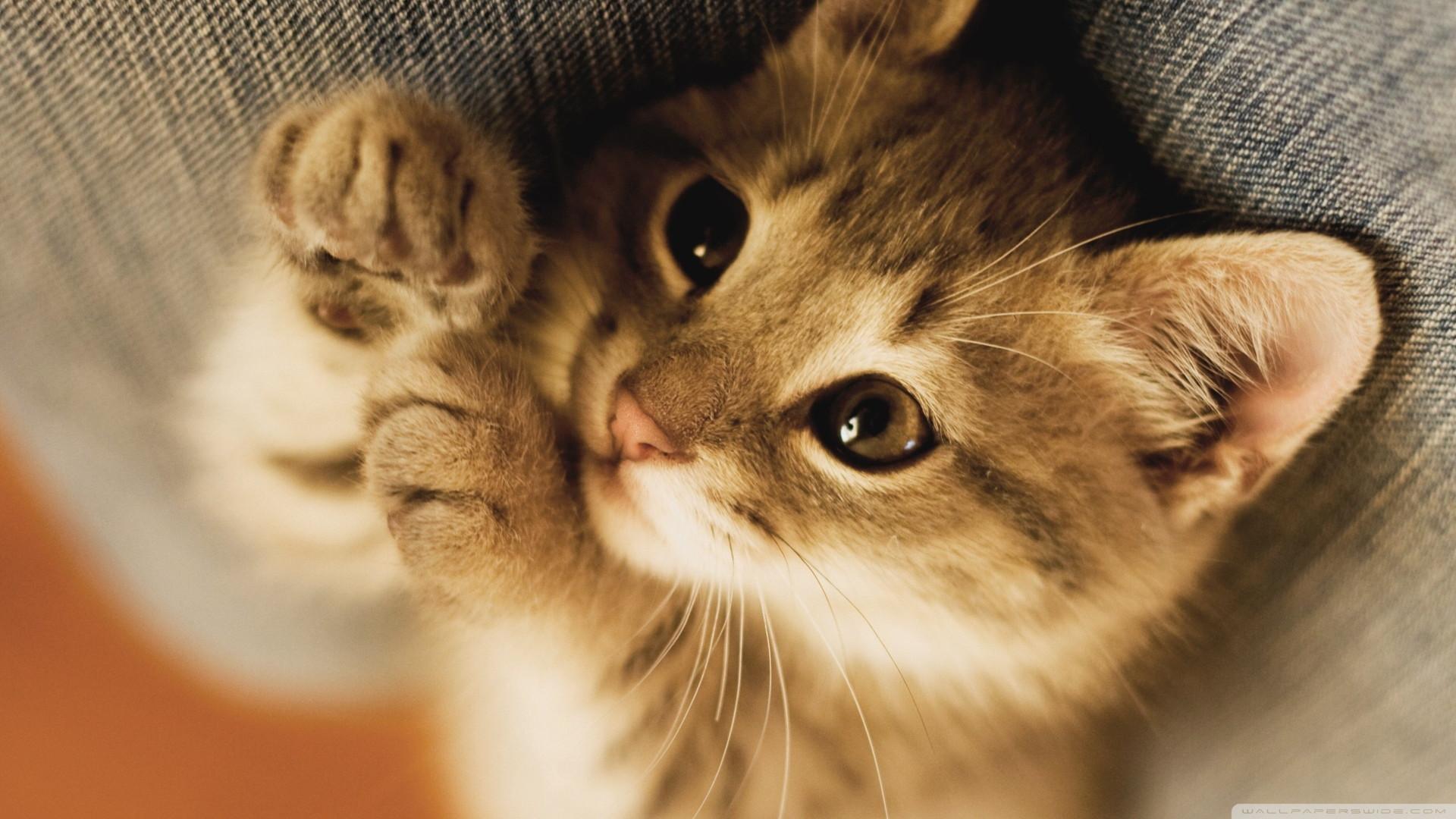 Mèo con hay mèo trưởng thành đều đáng yêu, tuy nhiên mèo con lại có những nét ngây ngô, tinh nghịch khác biệt mà khi nhìn thấy thì ai cũng dễ dàng ...