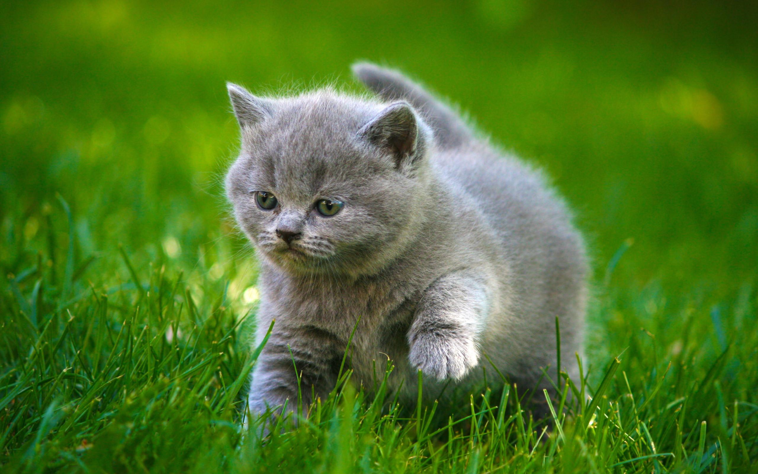... tầm và lựa chọn, ảnh mèo con đáng yêu kute ngộ nghĩnh để bạn tải về làm hình nền máy tính hoặc hình nền điện thoại là lựa chọn hoàn hảo nhất.