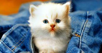 Hình ảnh mèo con dễ thương kute