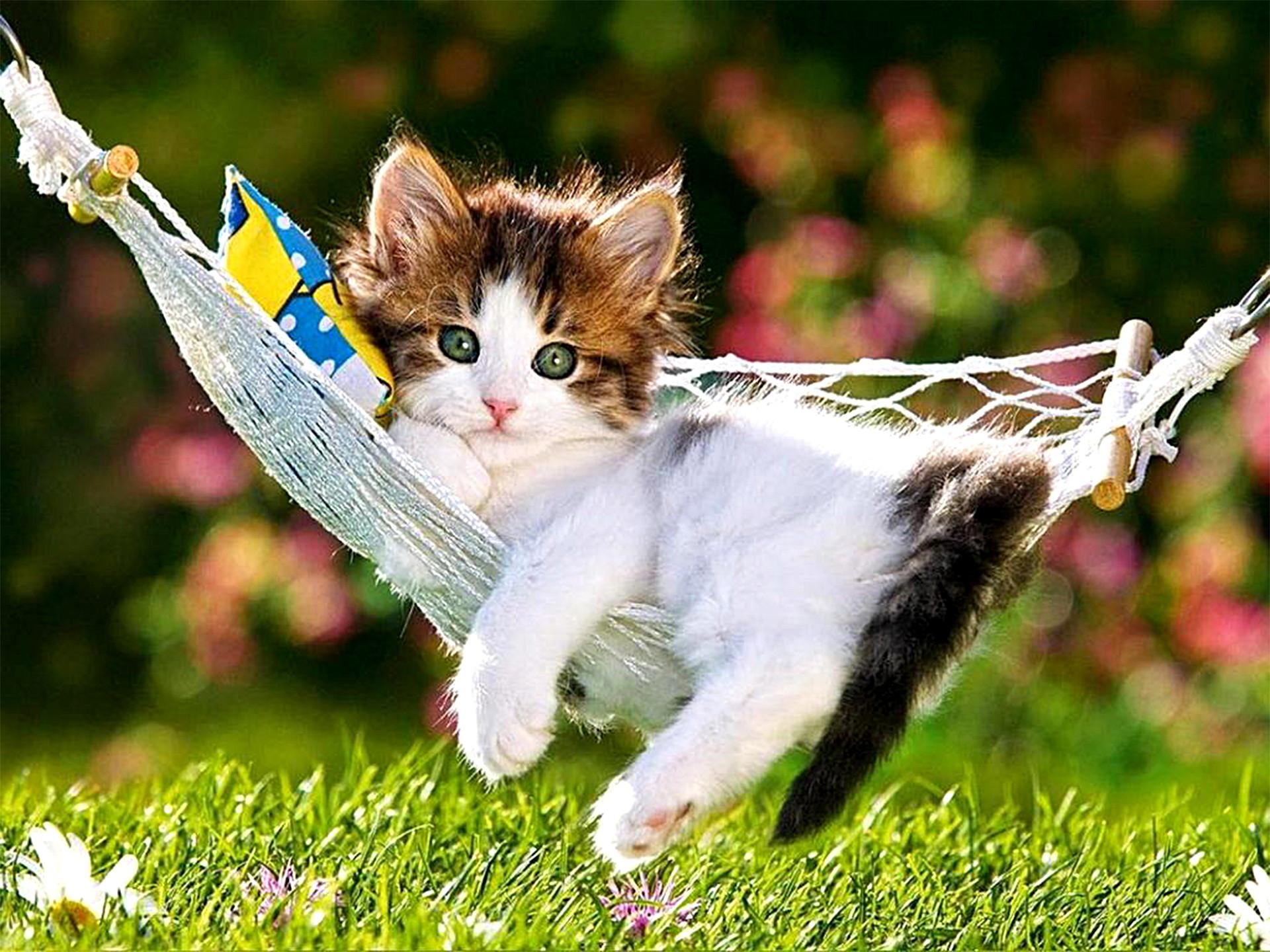 Hầu hết ai trong chúng ta cũng đều rất yêu động vật, bởi vì động vật hiền lành, ngốc nghếch và đáng yêu. Trong số đó mèo là loài động vật sống ...