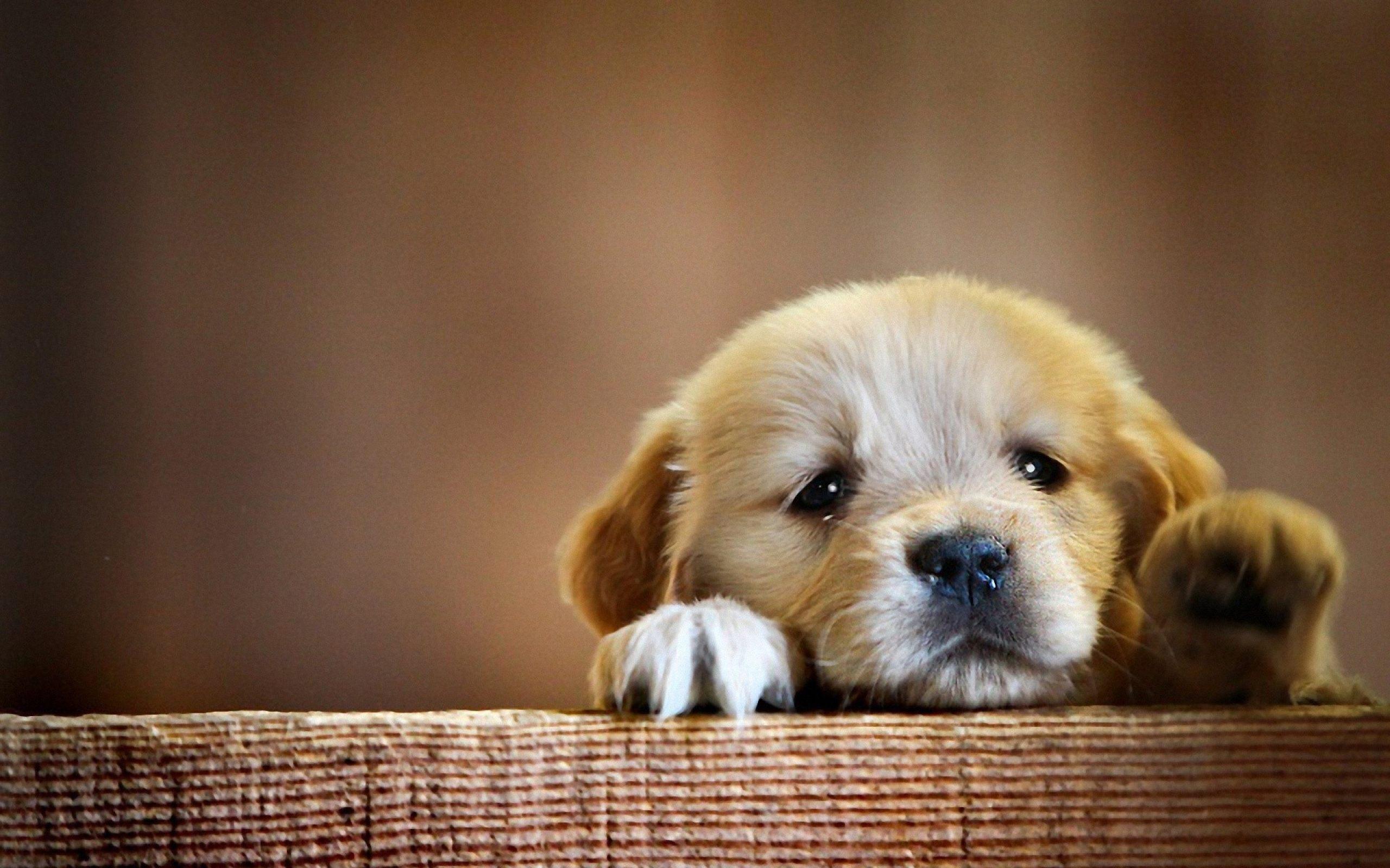ảnh cún con đáng yêu nhất