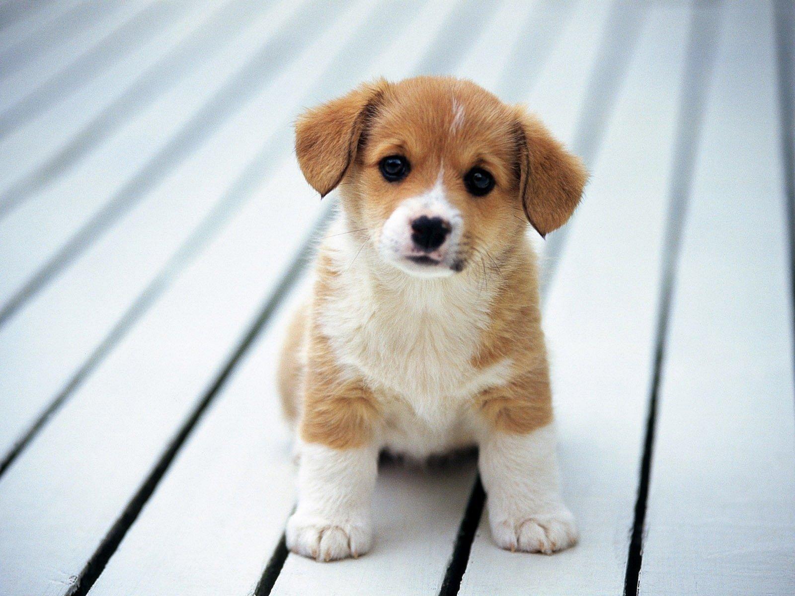 Vừa rồi là bộ sưu tập những hình ảnh dễ thương nhất về cún con mà chúng tôi gửi đến bạn, những người yêu thương loài động vật này.