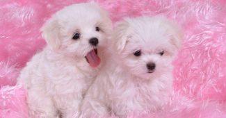 hình ảnh cún con dễ thương