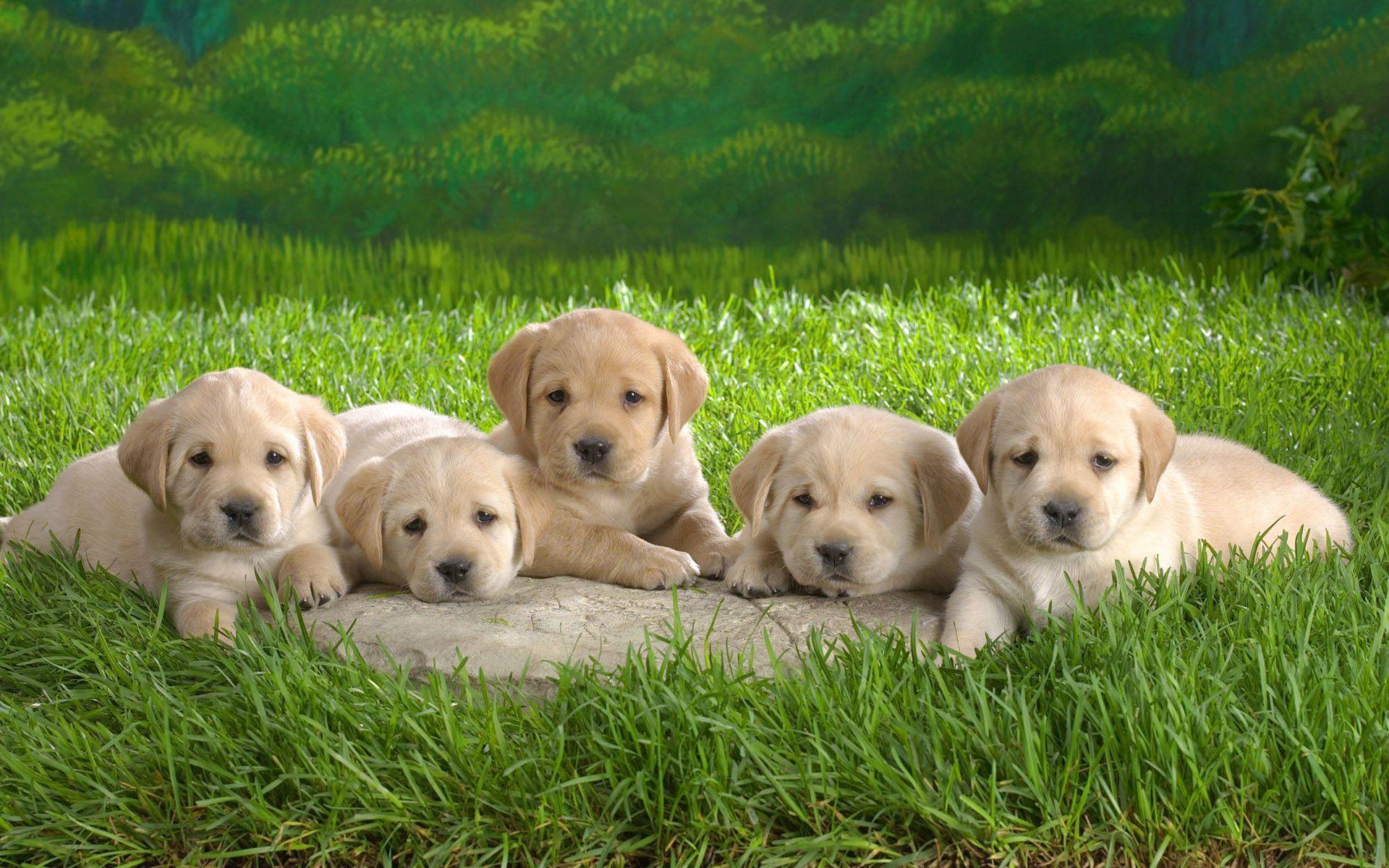 hình ảnh cún con đẹp