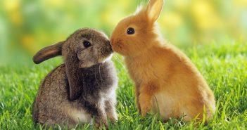 Tải ảnh động vật kute đáng yêu