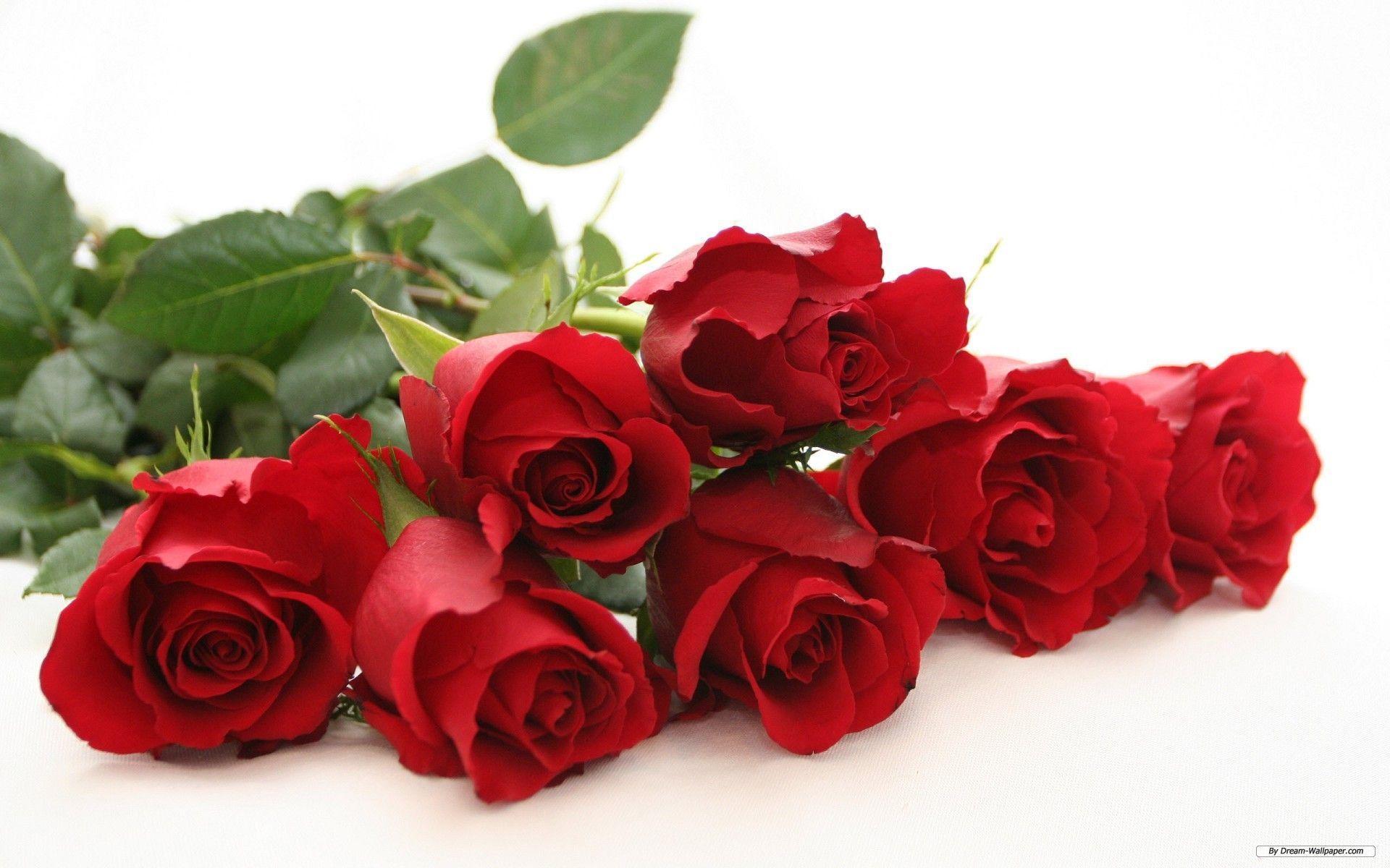 Hoa hồng có khá nhiều chủng loại khác nhau và mỗi loài hoa mang một thông điệp, sắc thái riêng. Tương ứng theo đó, mỗi màu hoa hồng cũng mang một ý ...