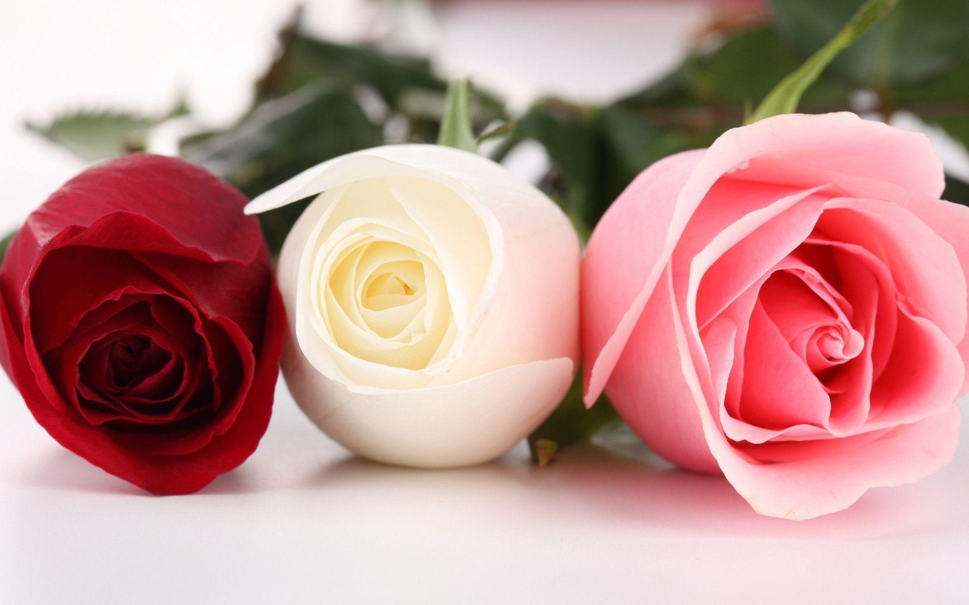 Trong bộ sưu tập này chúng tôi gửi đến bạn những hình ảnh đẹp nhất, ngọt ngào nhất về hoa hồng để các bạn có thể ngắm nhìn hoặc gửi tặng cho ...