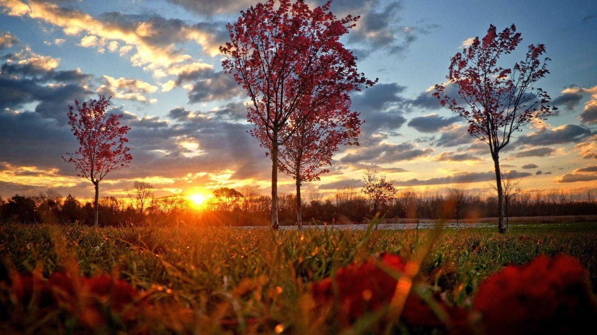 ... phong cách cùng chất lượng full HD mang đến cho bạn những hình ảnh sắc nét nhất. Cùng chiêm ngưỡng và tải hình ảnh đẹp của mùa thu về máy ngay thôi!!!