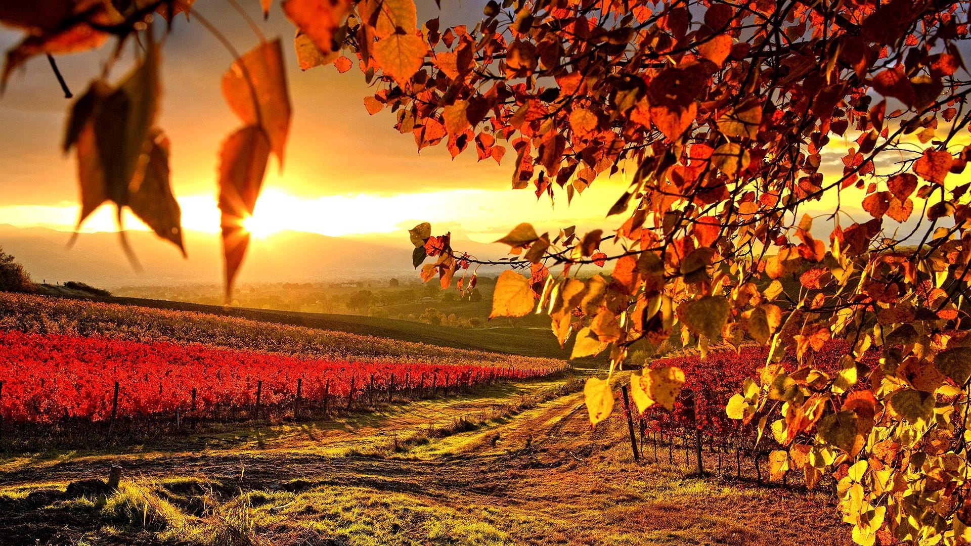 Màu vàng đỏ là màu chủ đạo của mùa thu, vì sao lại thế? Vì mùa thu là mùa cây cối bắt đầu vàng đi để chuẩn bị thay lá, ...