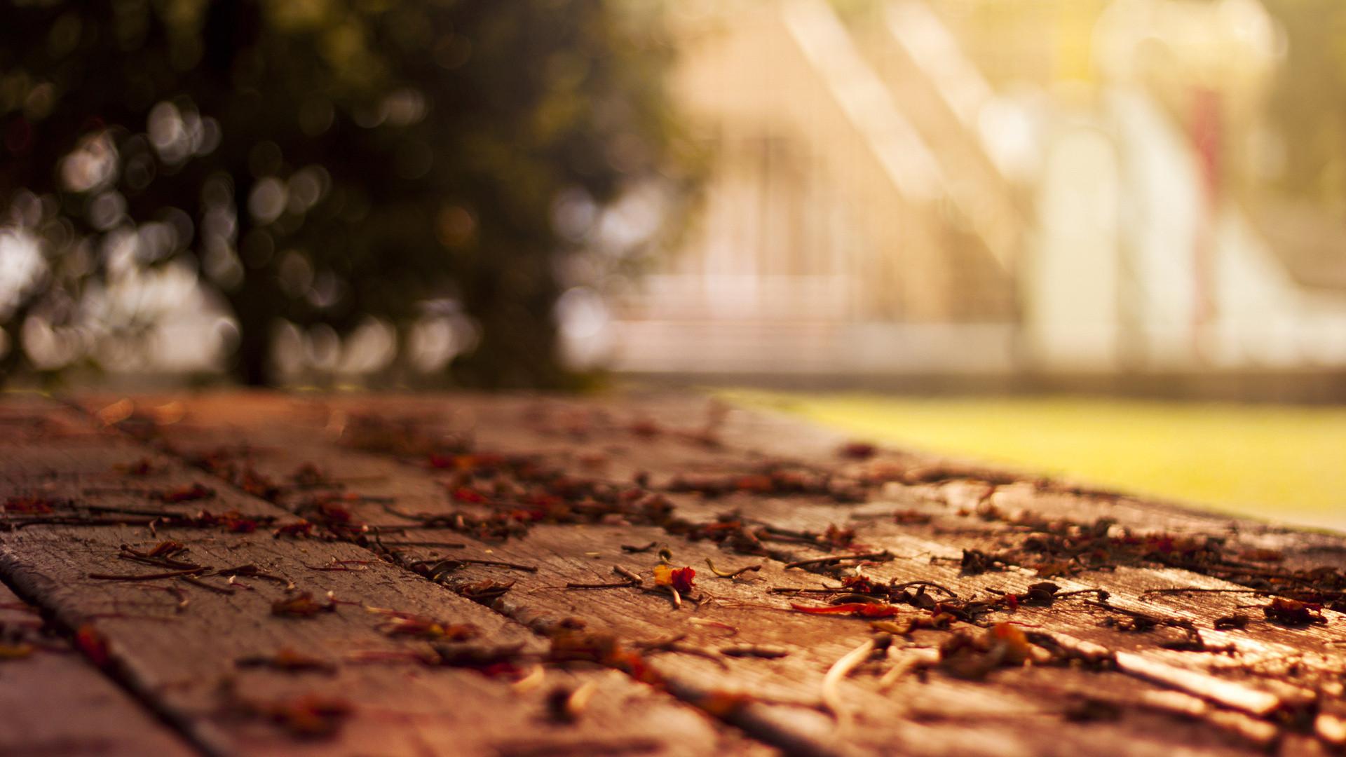 Các nhiếp ảnh gia chuyên nghiệp thường ghi lại những khoảnh khắc đẹp nhất của mùa thu, đó là hình ảnh lá rơi, những hàng cây vàng rực, bầu trời xanh trong ...