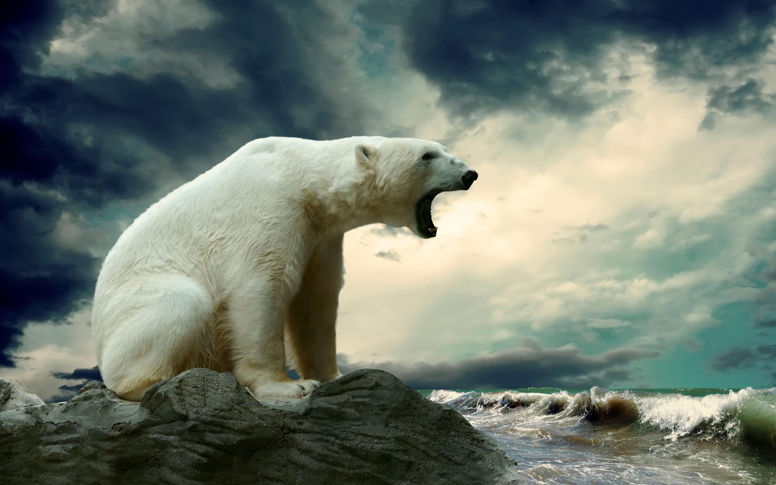 tải ảnh gấu bắc cực