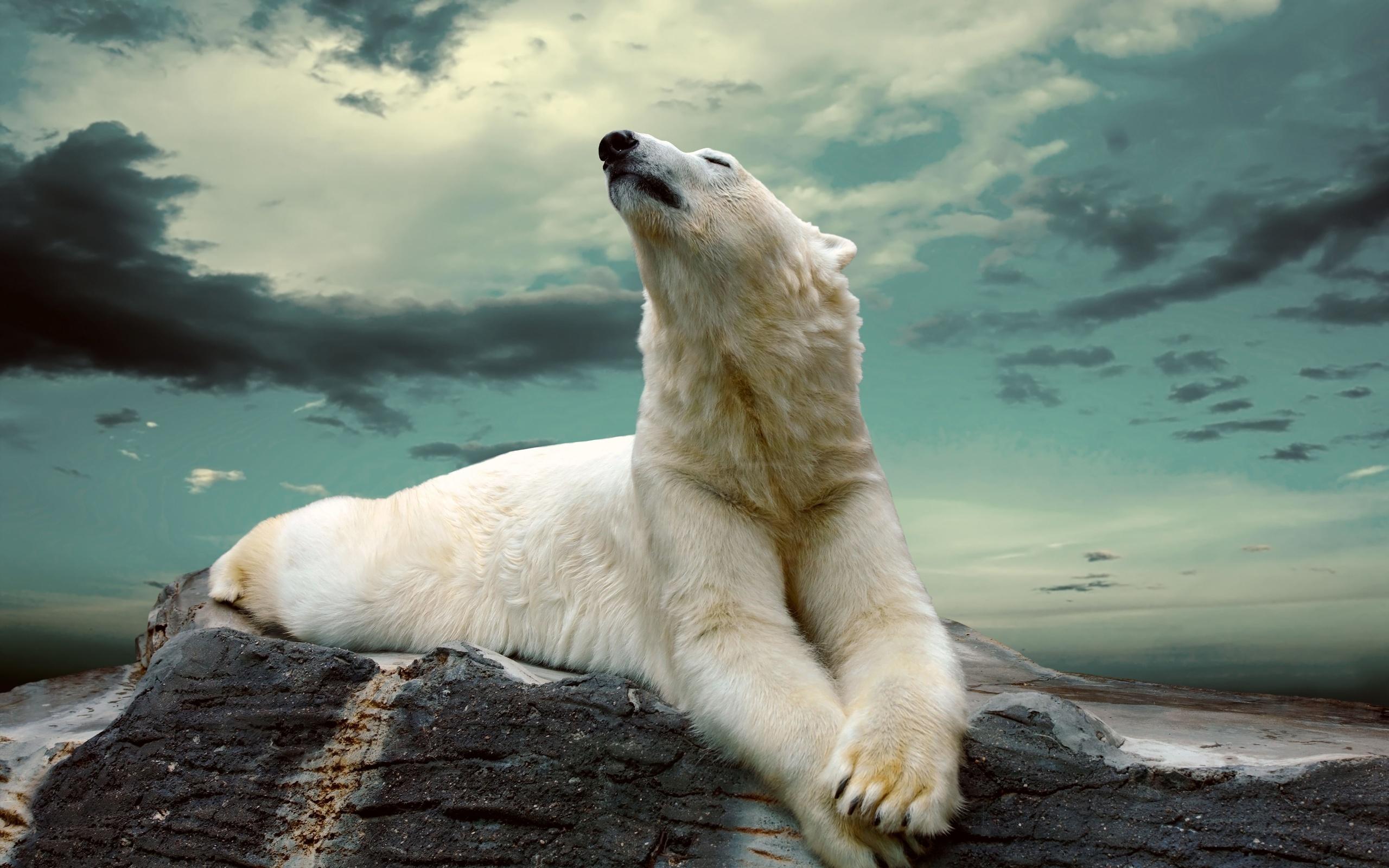 hình ảnh gấu bắc cực đẹp