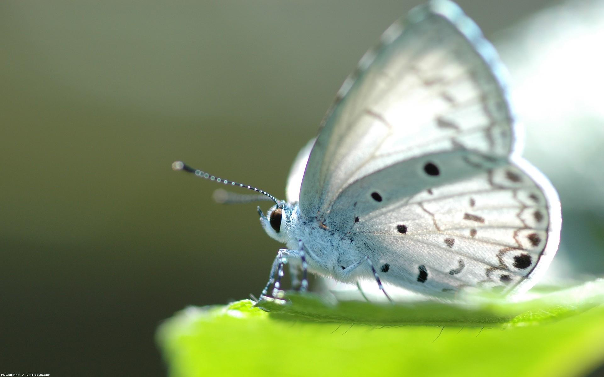 hình ảnh bướm