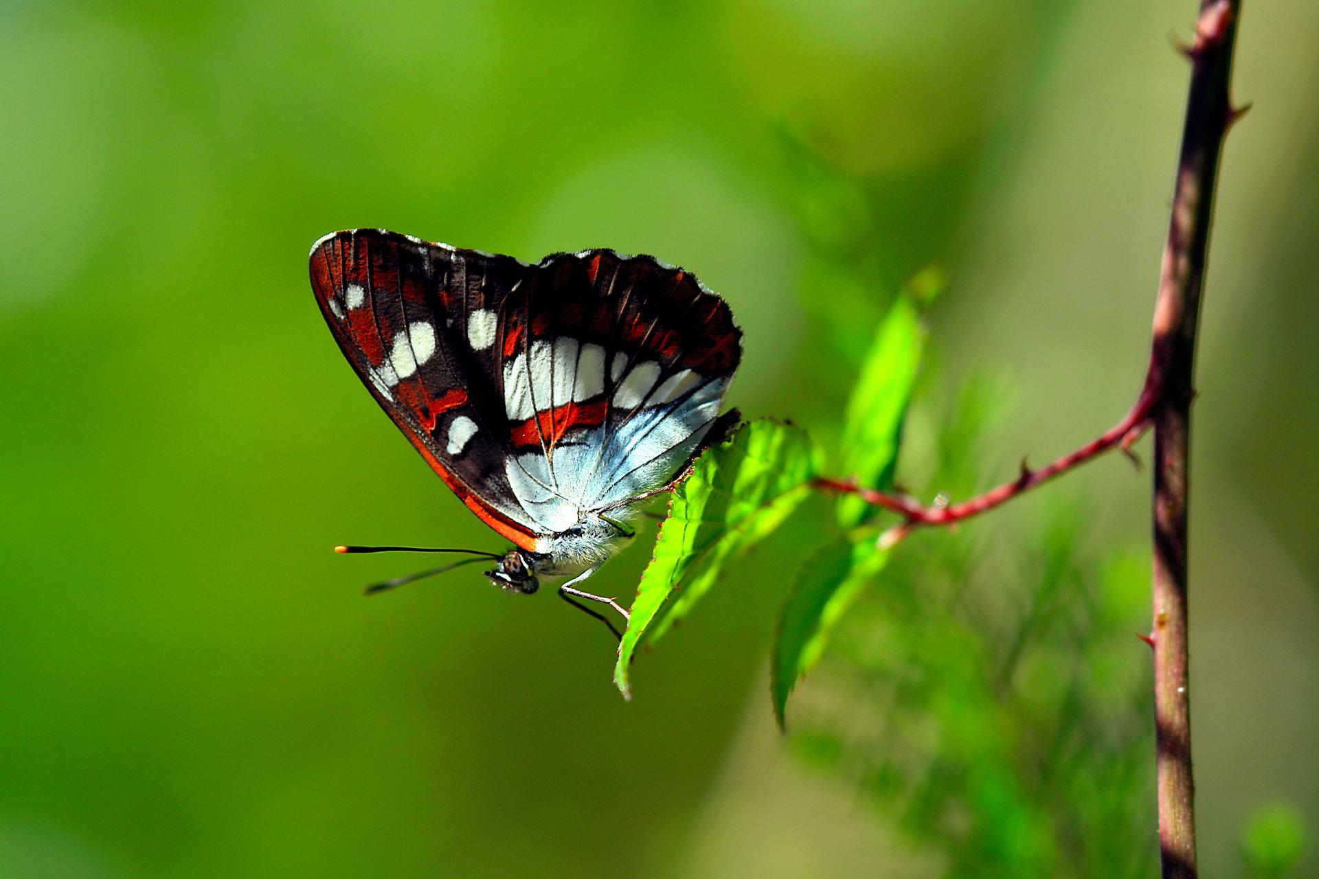 tải ảnh bướm đẹp về máy tính