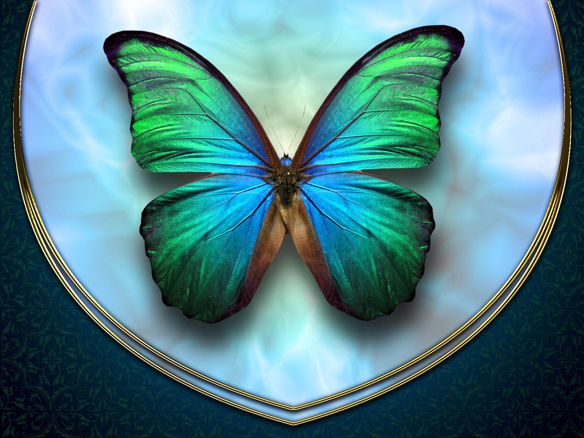 xem ảnh bướm đẹp