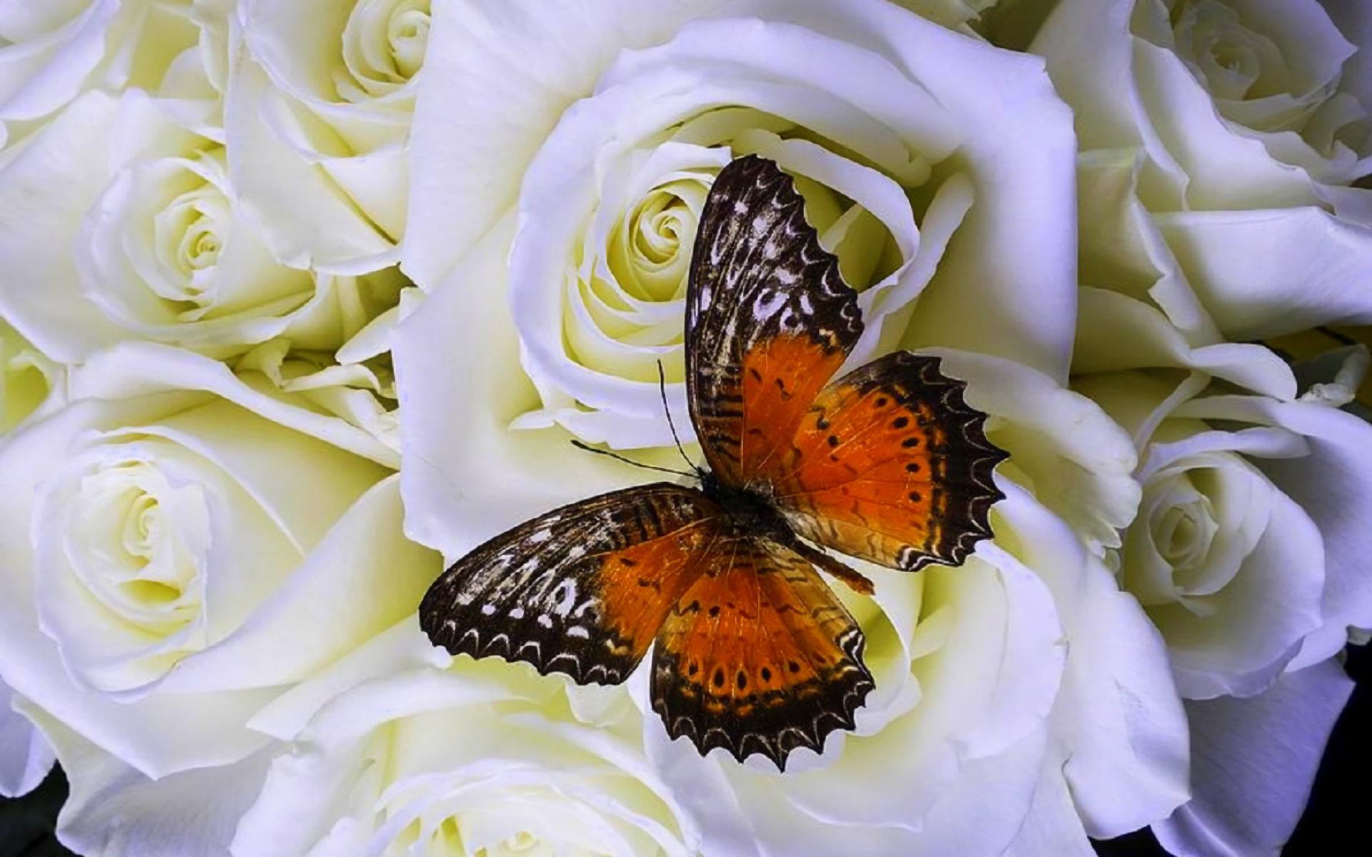 tải ảnh bướm đẹp nhất