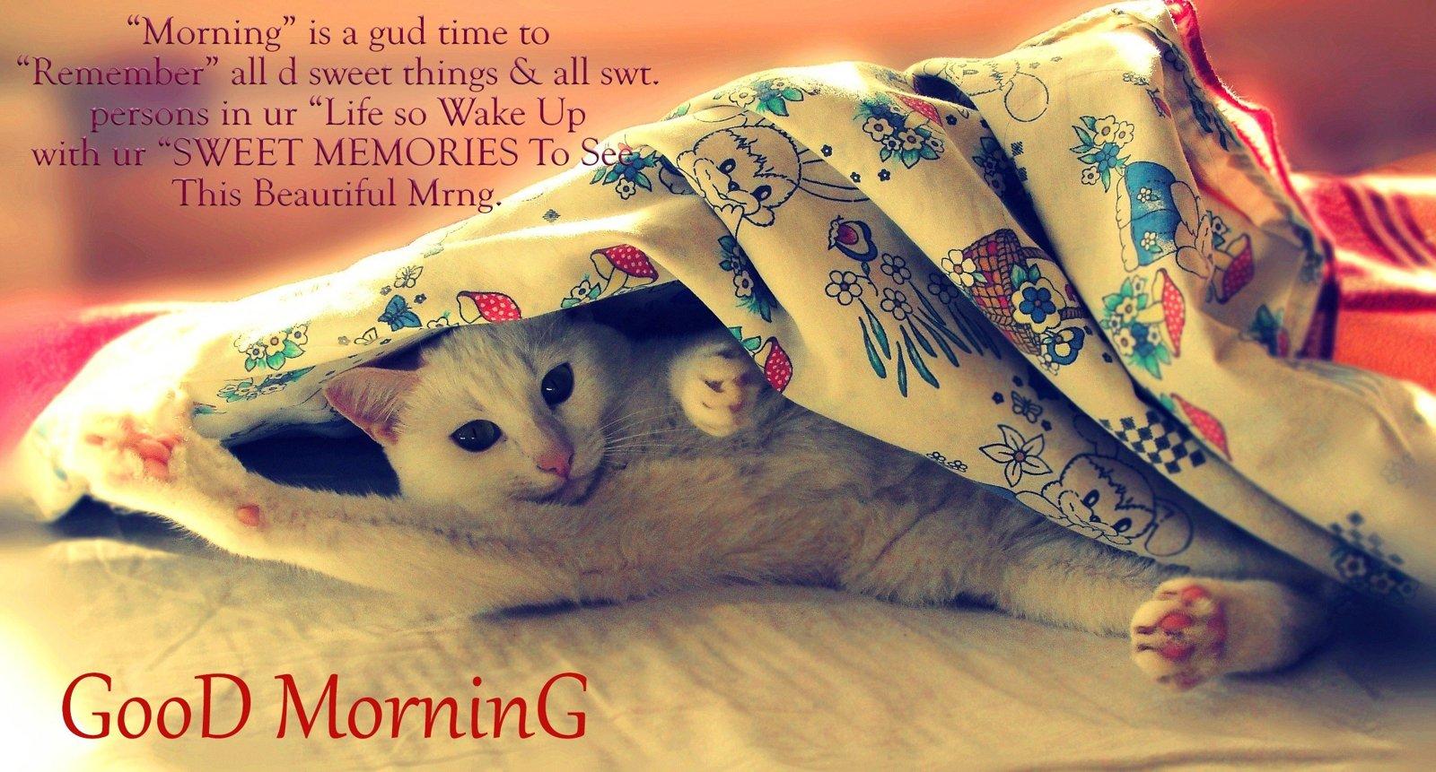 hinh anh good morning dep