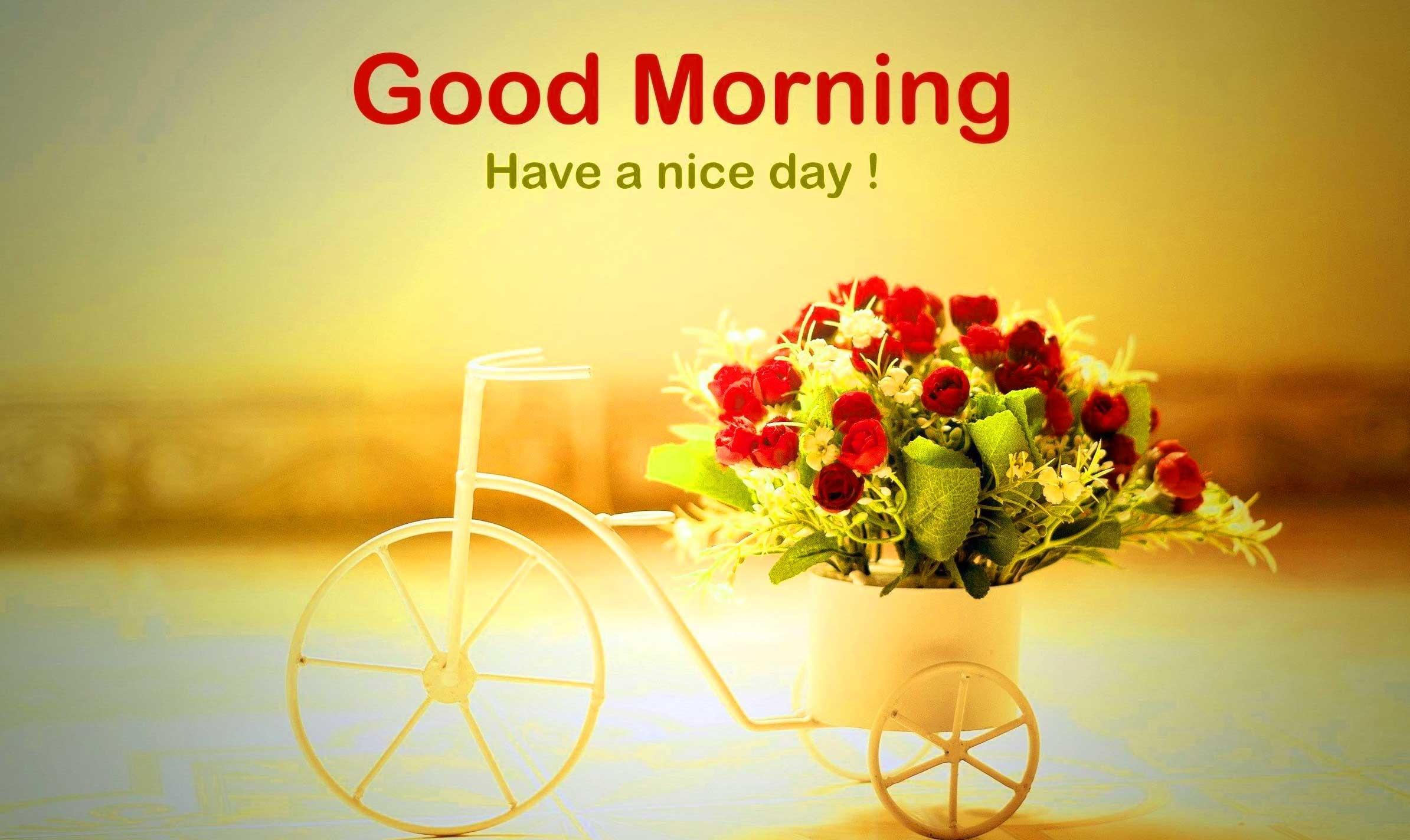 ... tôi sẽ gửi đến bạn những hình ảnh chào buổi sáng sinh động và ấm áp, an lành nhất để giúp bạn có một tiền đề cho ngày mới tươi đẹp hơn.