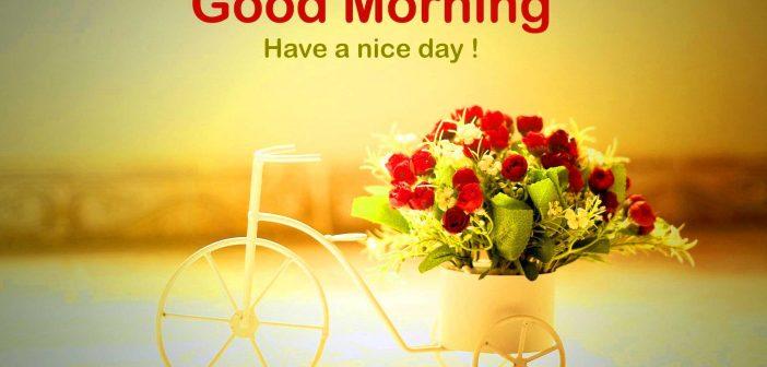 Hình ảnh Good Morning