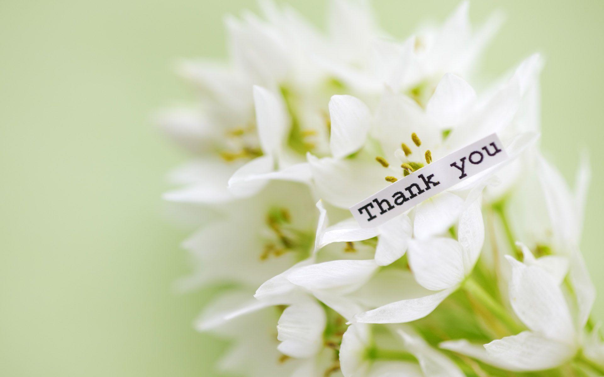 hinh nen thank you 10
