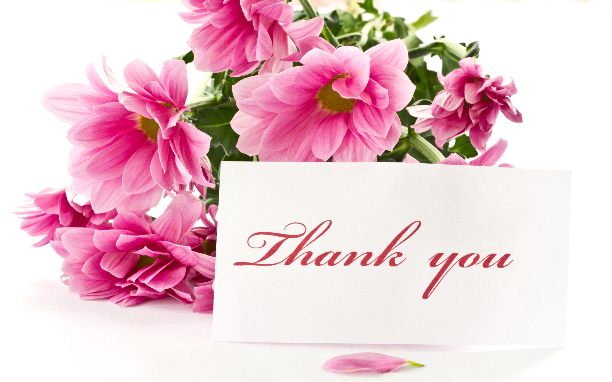 hinh nen thank you 21
