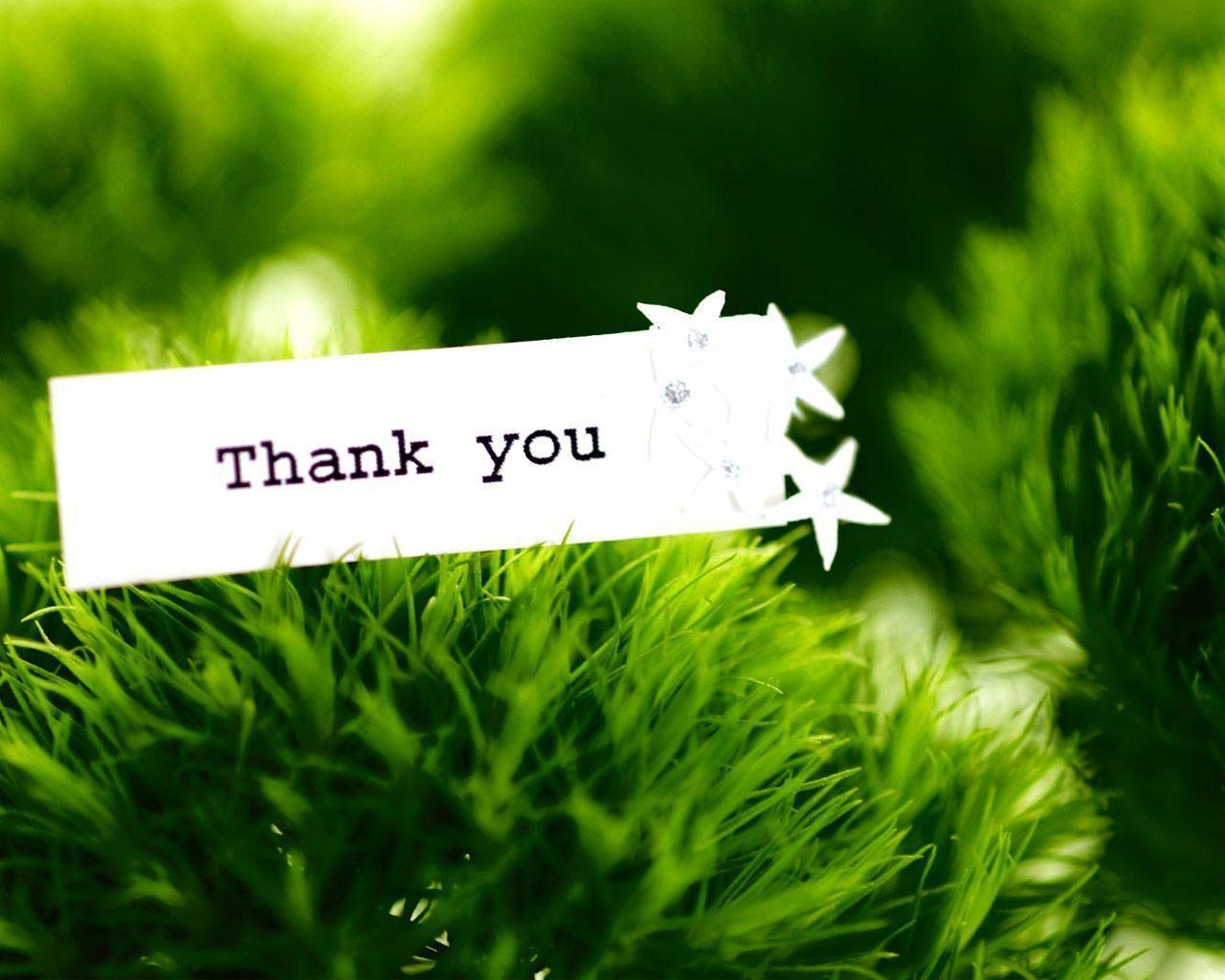 hinh nen thank you 9