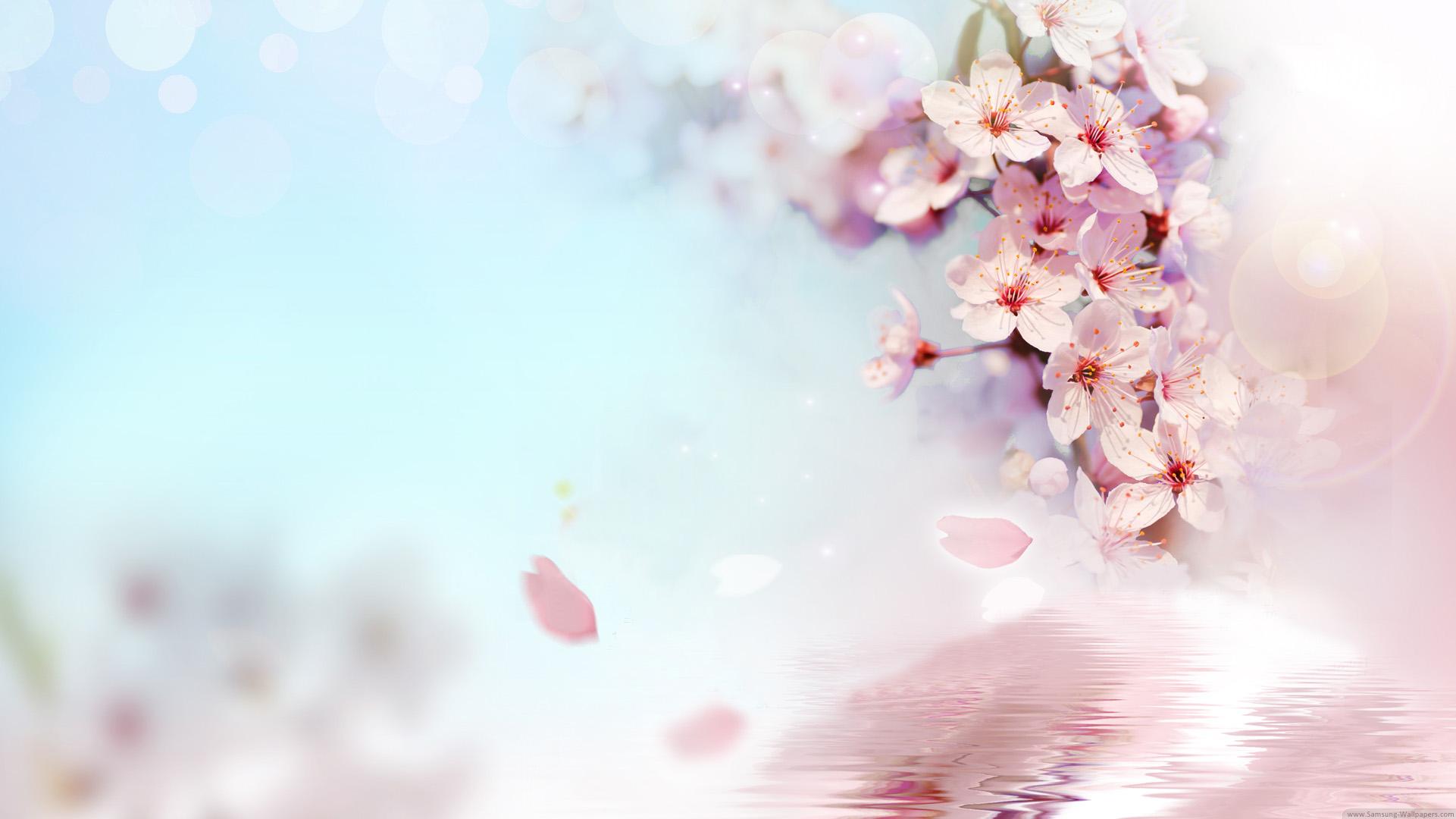 top hinh nen hoa dao dep 13