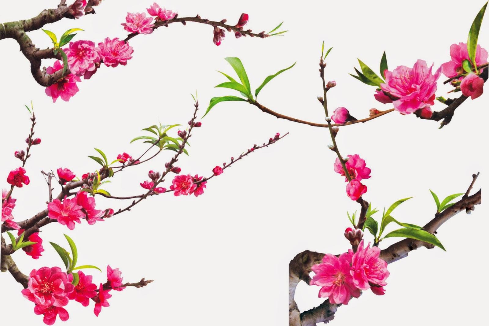 top hinh nen hoa dao dep 17