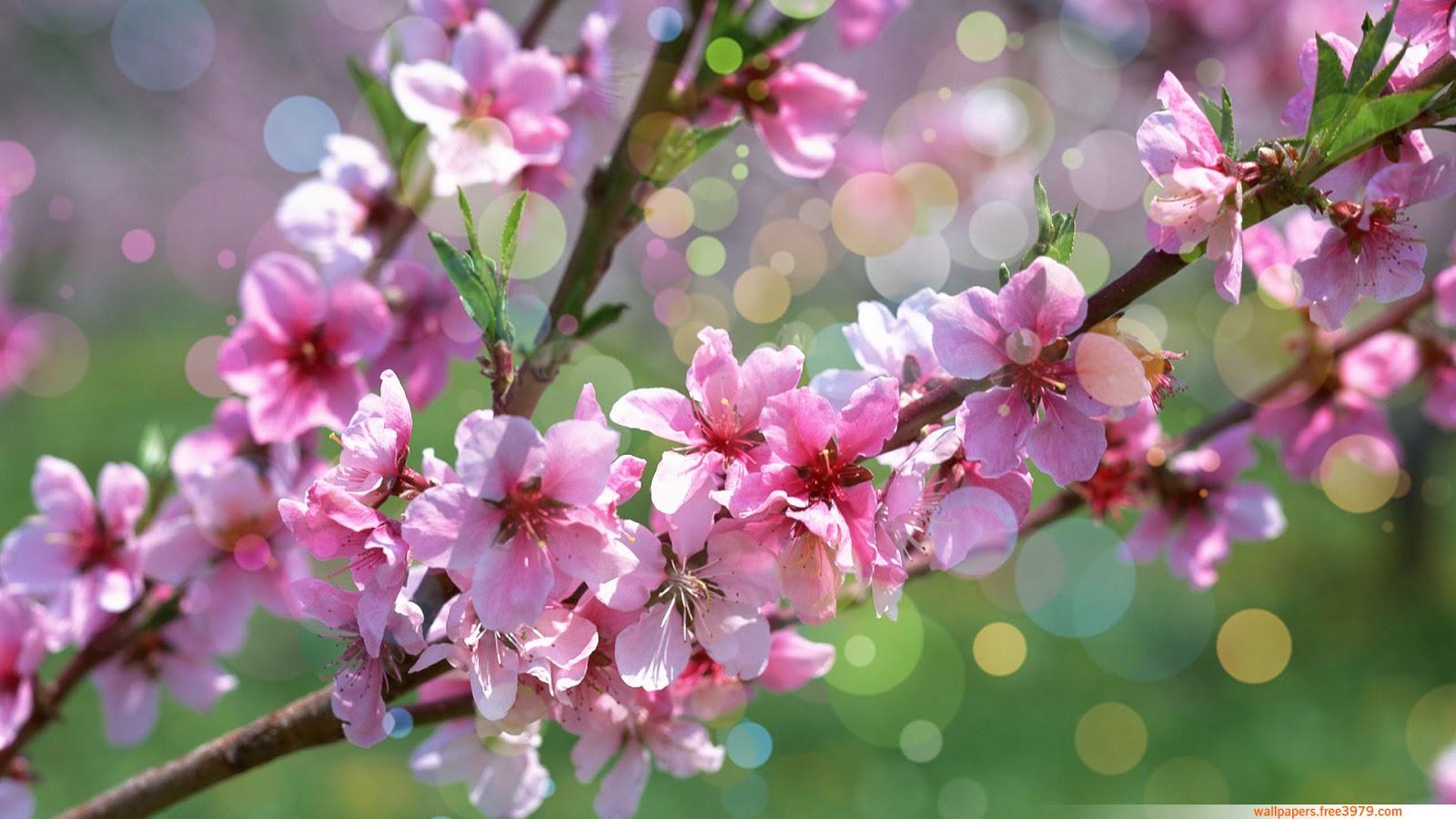 top hinh nen hoa dao dep 21