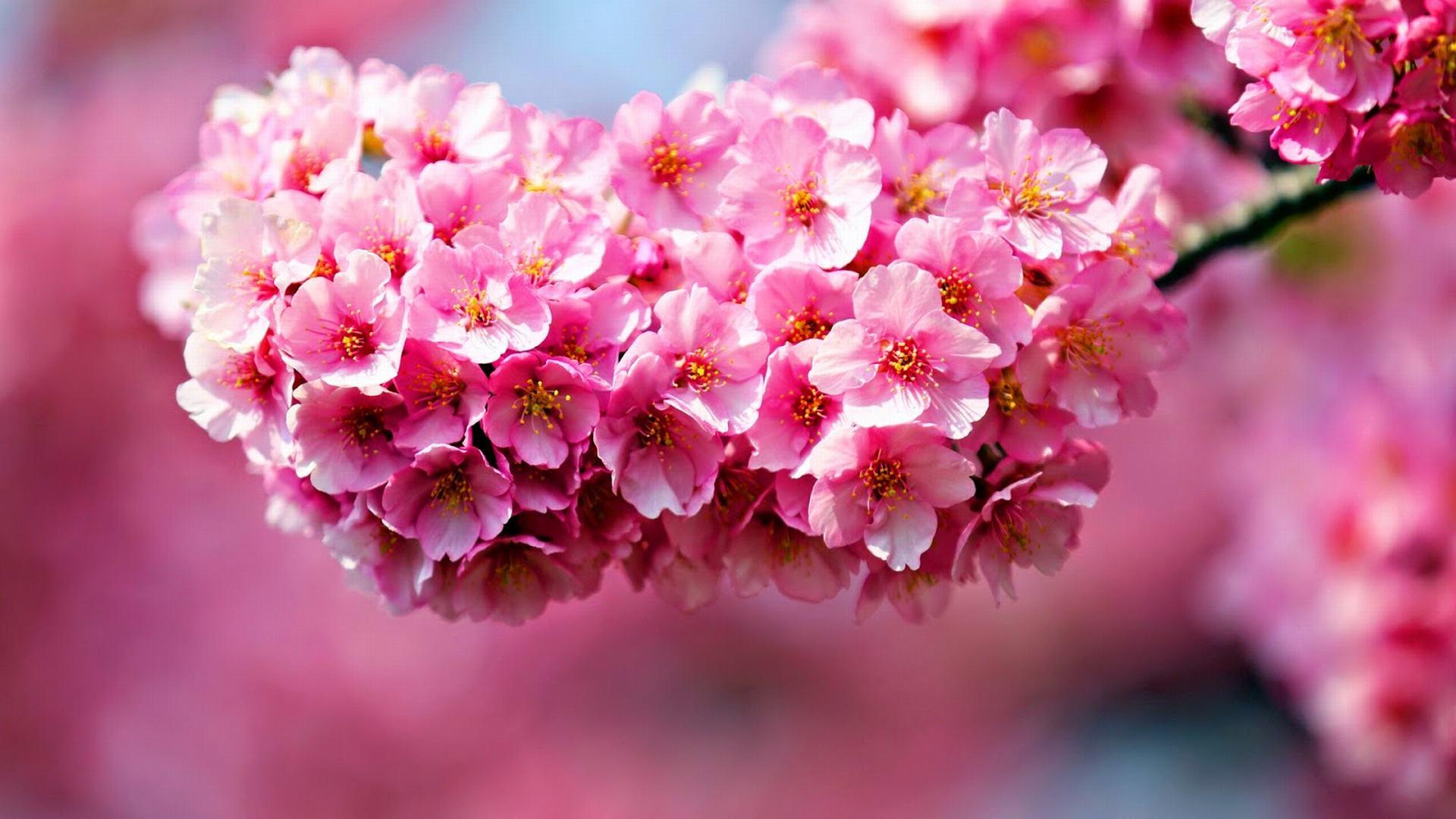 top hinh nen hoa dao dep 23