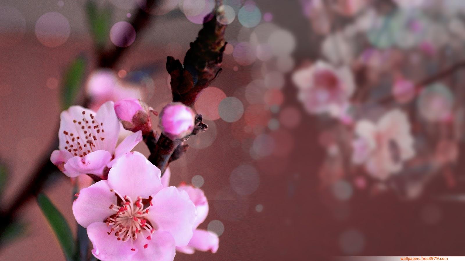 top hinh nen hoa dao dep 24