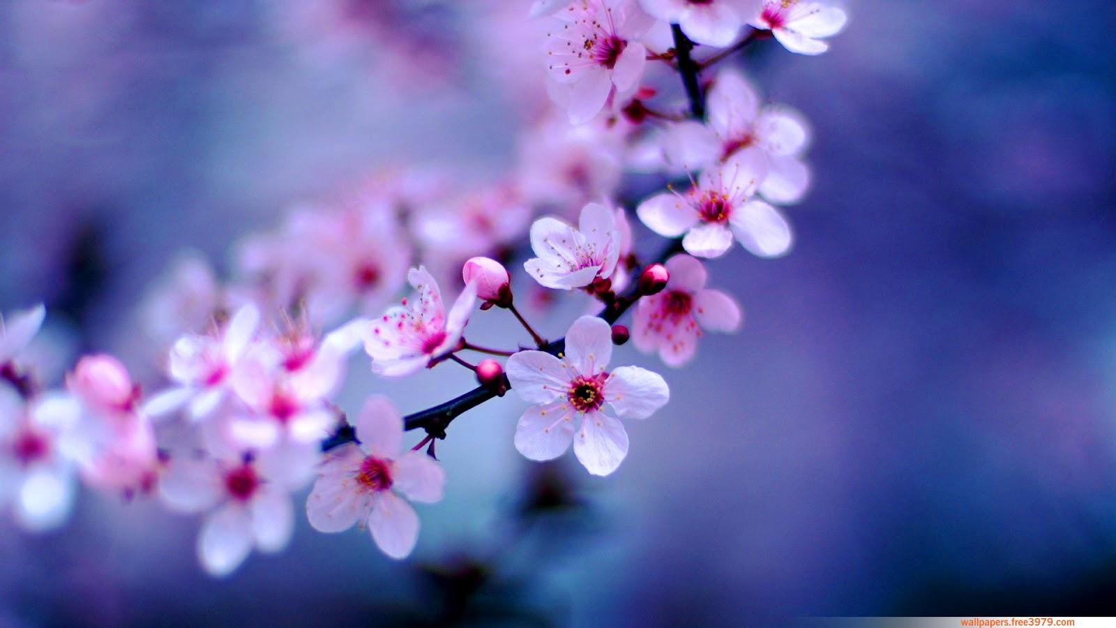 top hinh nen hoa dao dep 28