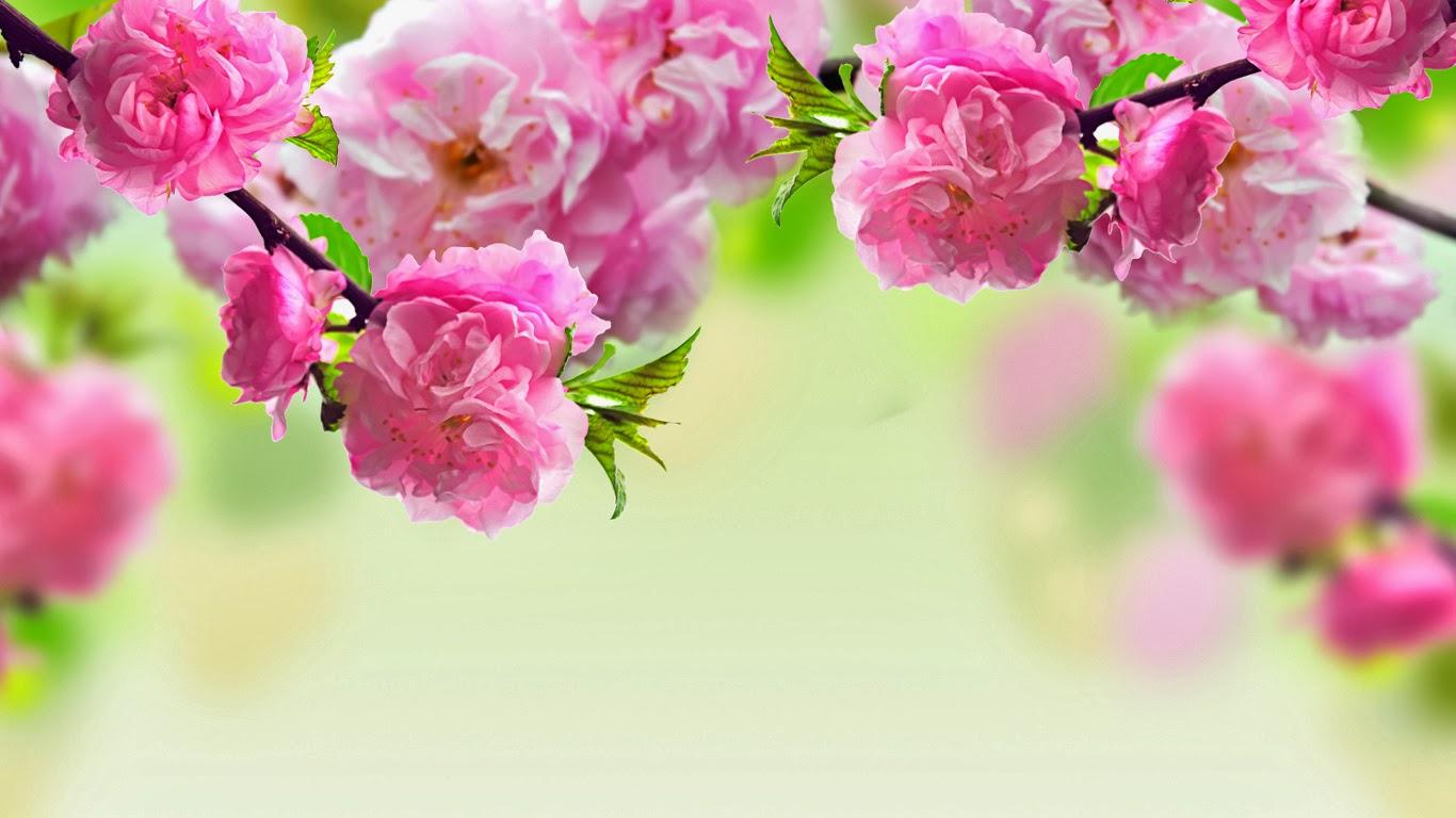 hinh anh hoa dao dep