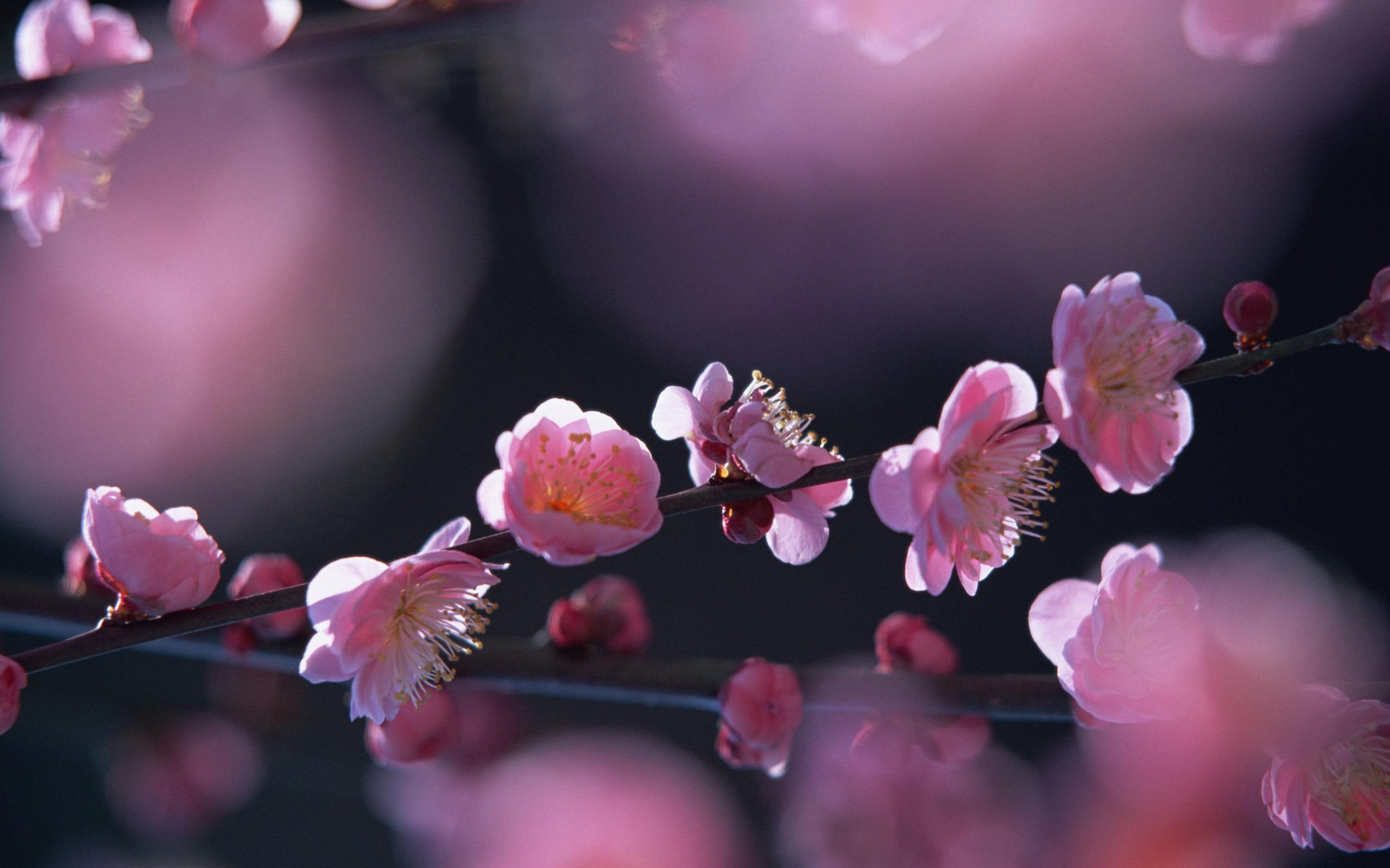 top hinh nen hoa dao dep 4