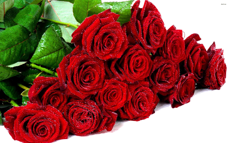 tải ảnh bó hoa hồng đẹp