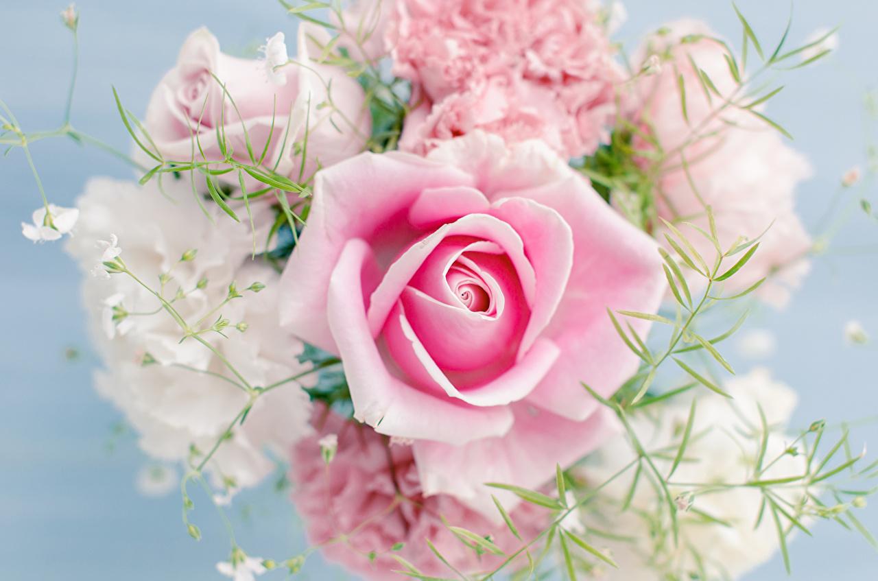 hình ảnh hoa hồng đẹp full hd