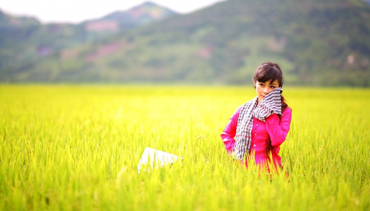 tải ảnh cánh đồng lúa