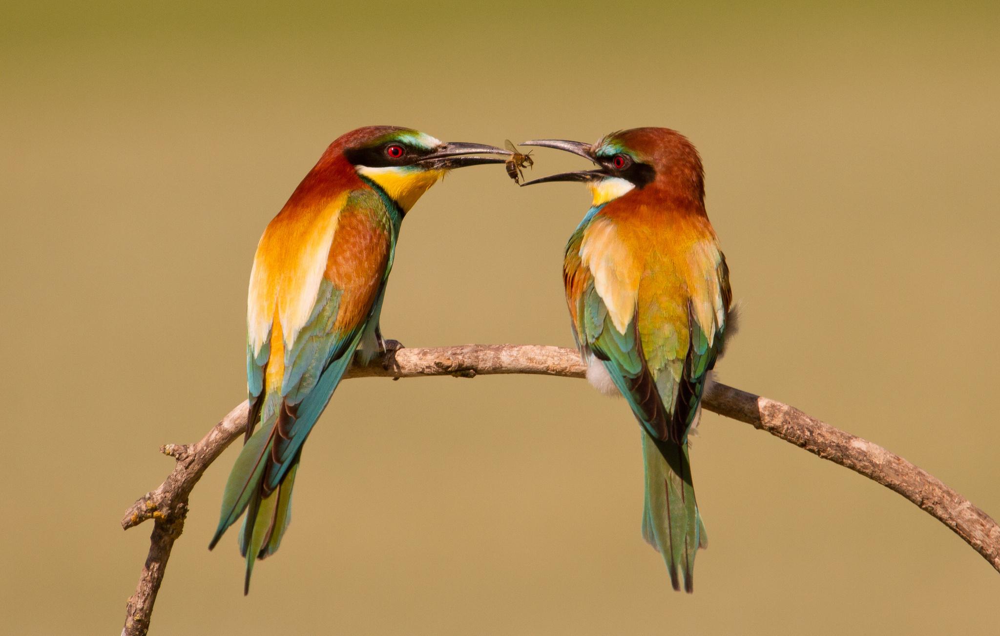 tải hình nền chim đẹp