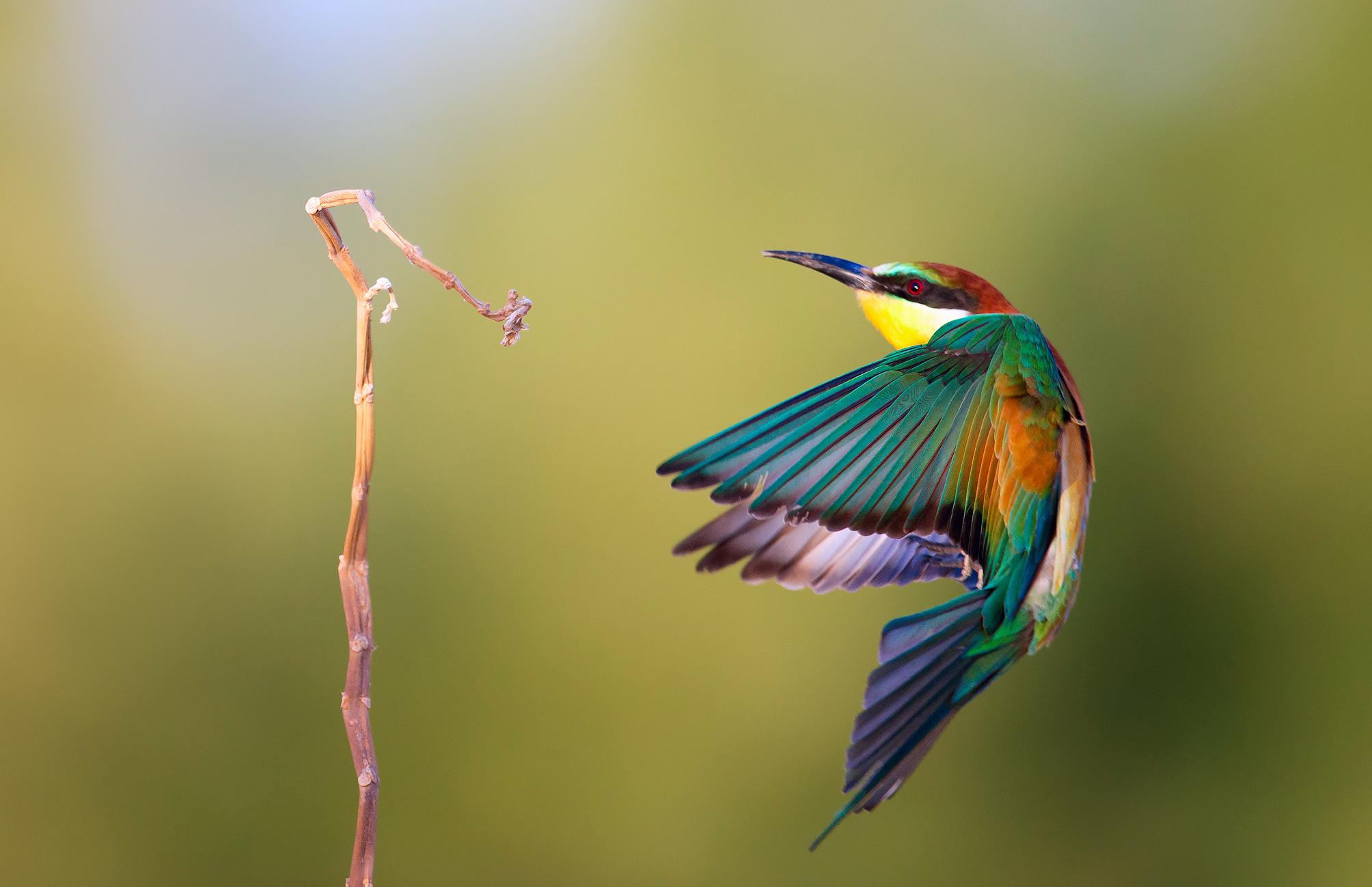 xem ảnh chim đẹp