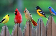 hình ảnh chim đẹp
