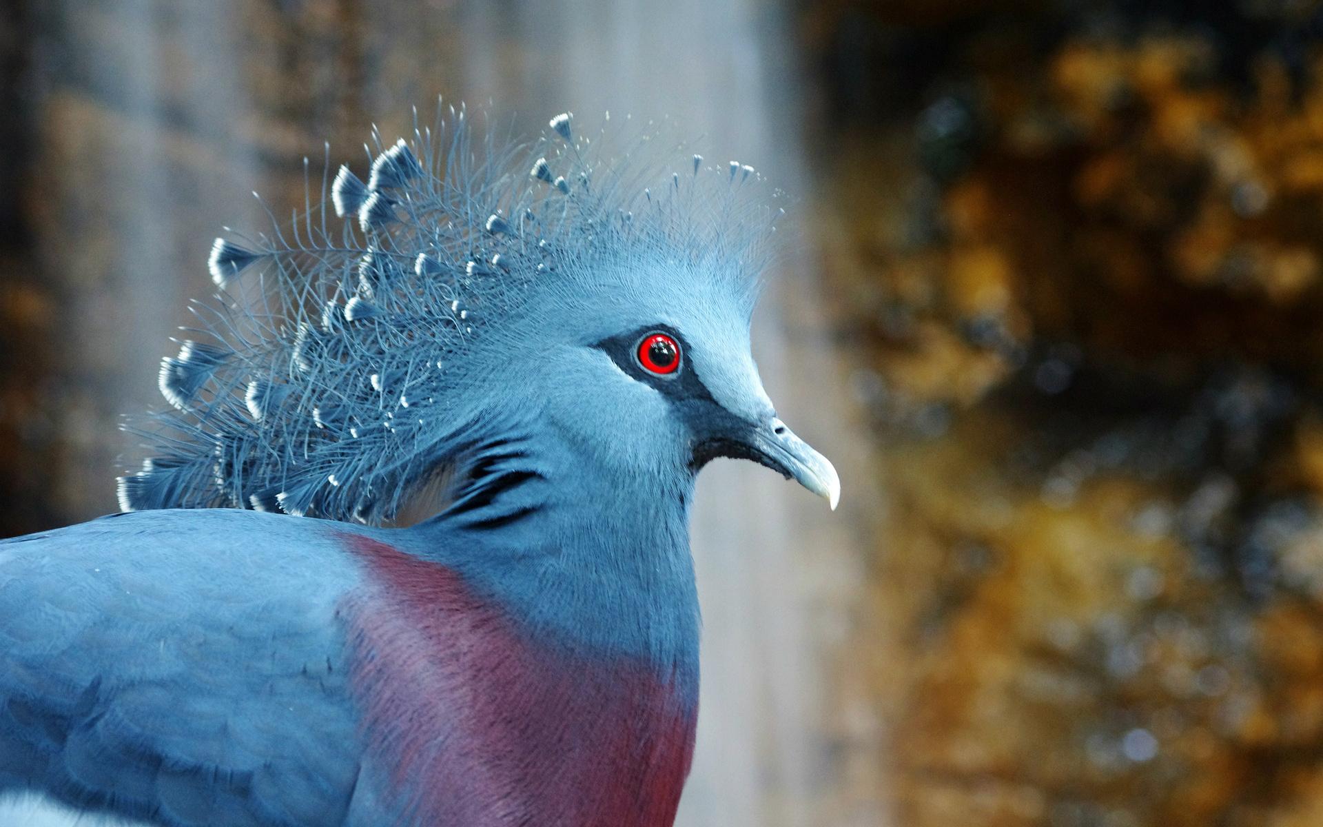 hình nền chim đẹp