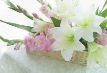 hình ảnh hoa lay ơn đẹp nhất
