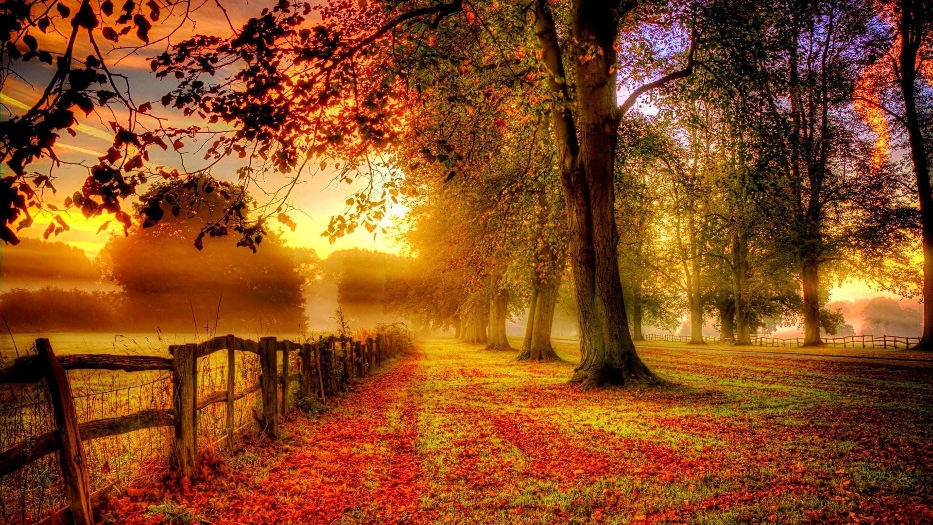 hình nền mùa thu đẹp