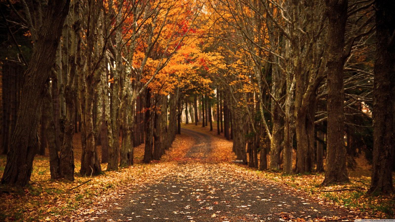 tải hình nền mùa thu