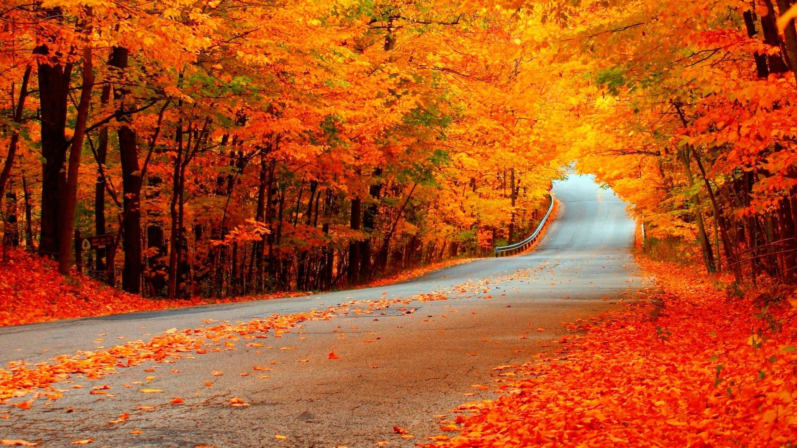 Không khí mùa thu mát mẻ và sảng khoái vô cùng. Đến cơn gió, chiếc lá hay mặt nước cũng trở nên nhẹ nhàng và dịu dàng đến lạ.