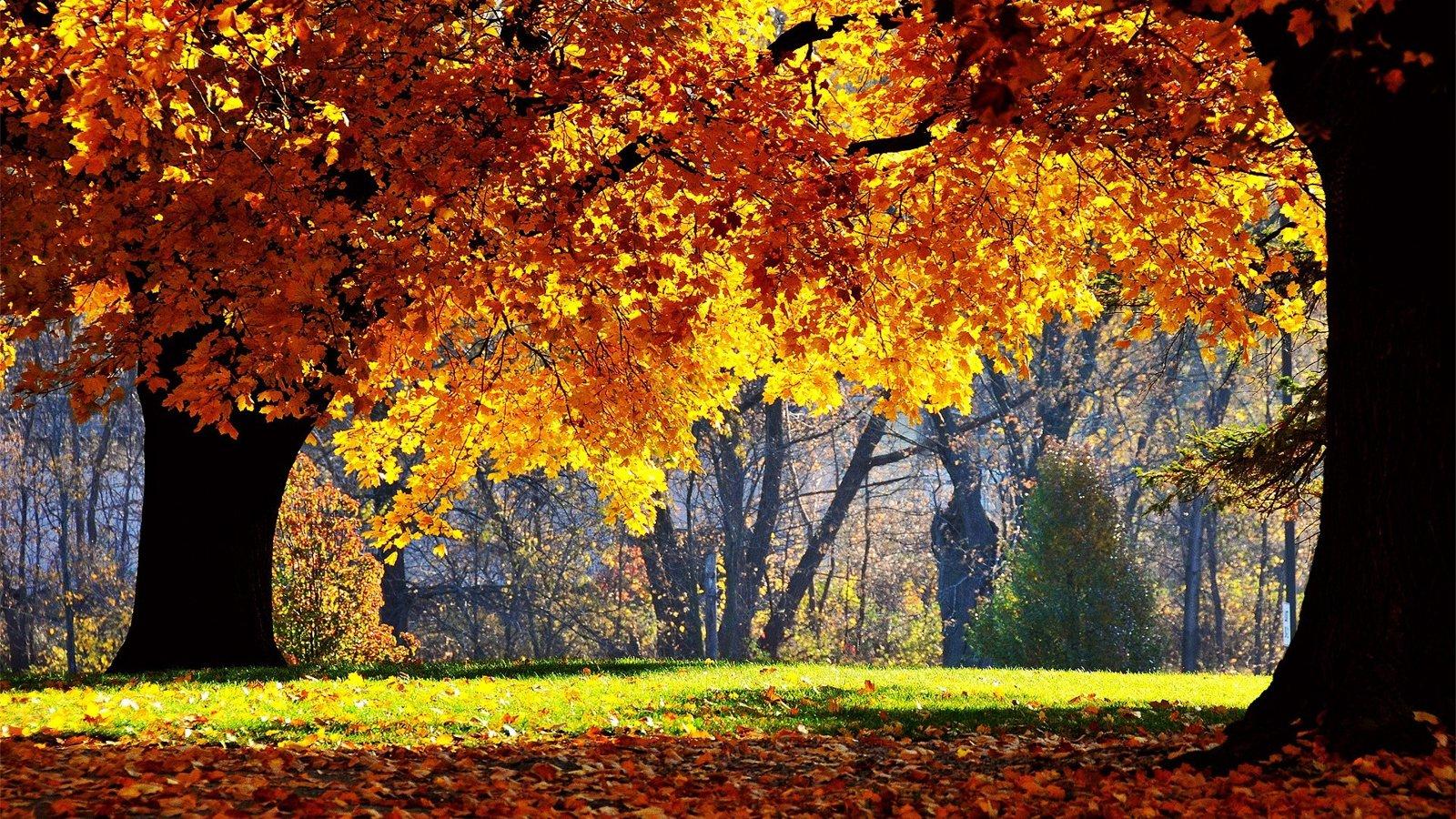 ảnh nền mùa thu