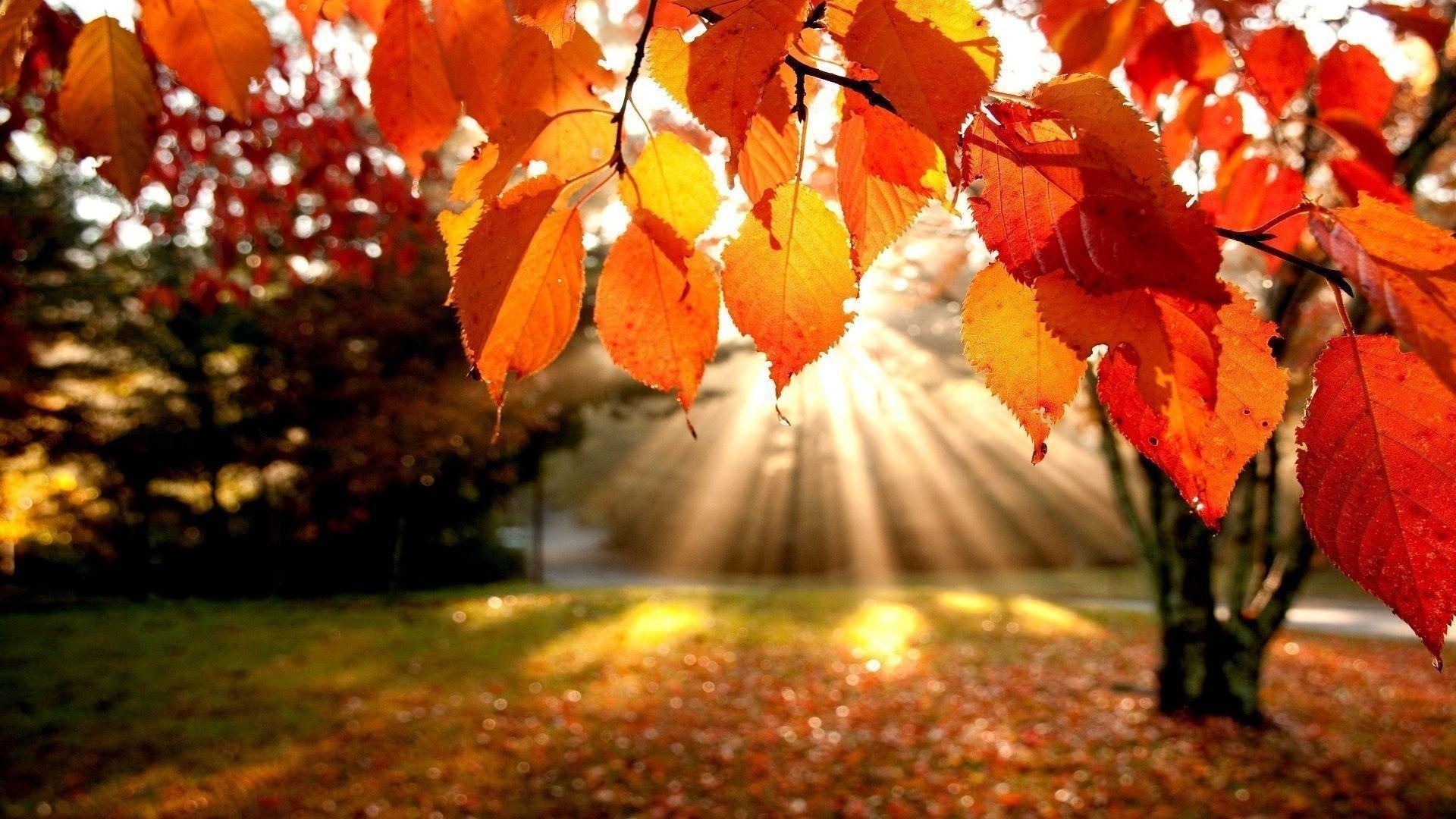 xem ảnh đẹp của mùa thu