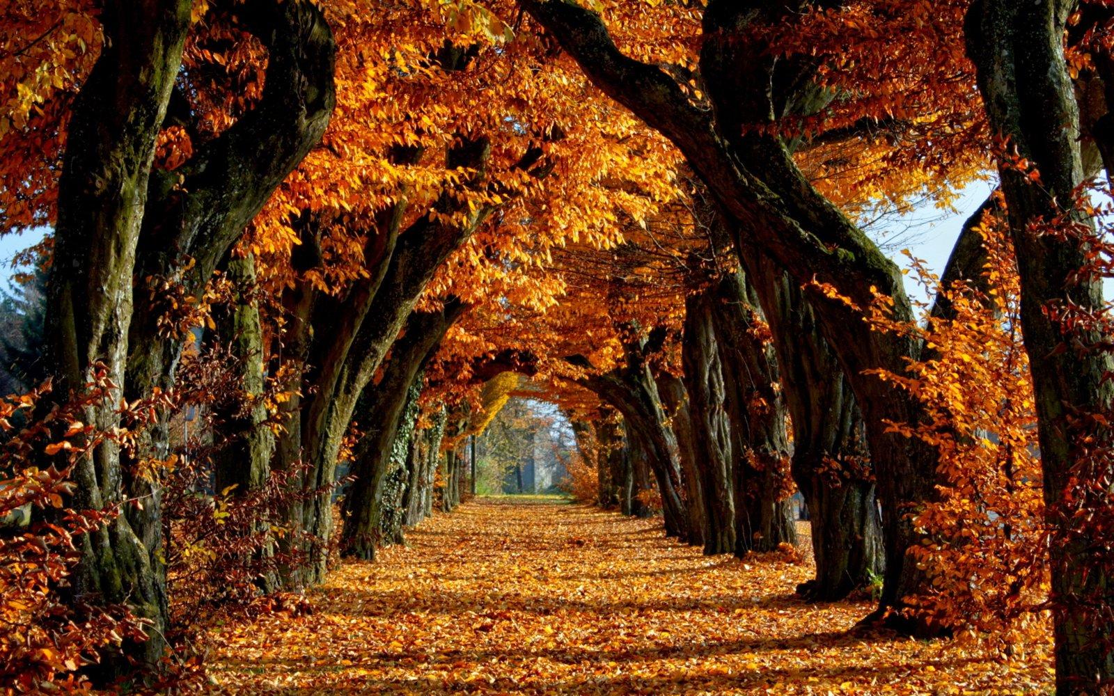 download hình ảnh mùa thu đẹp nhất