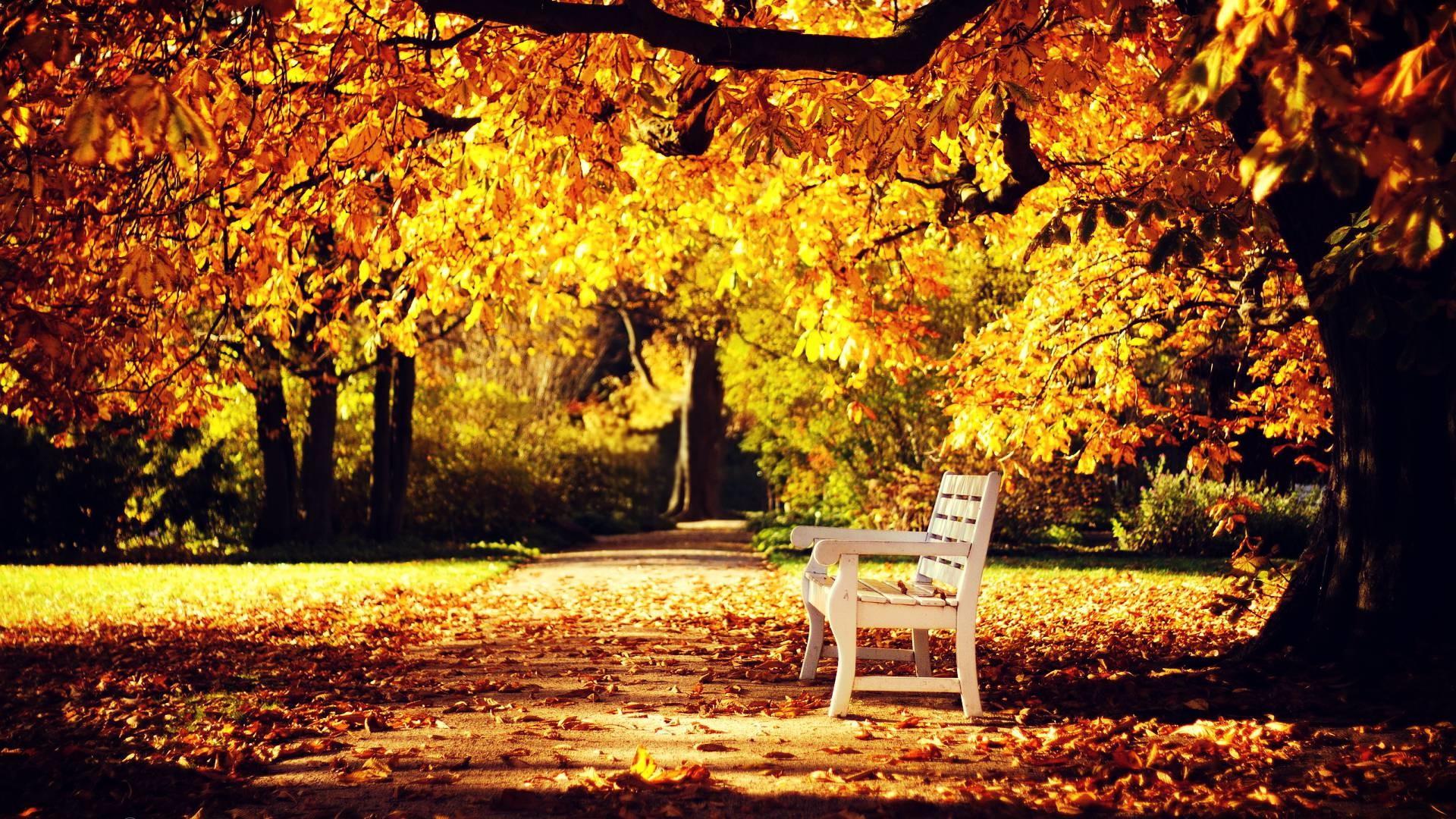 Mùa thu là mùa của tình yêu, của nỗi nhớ. Mùa thu trong lòng mỗi chúng ta đều đẹp đẽ, dịu dàng và bình yên đến lạ.